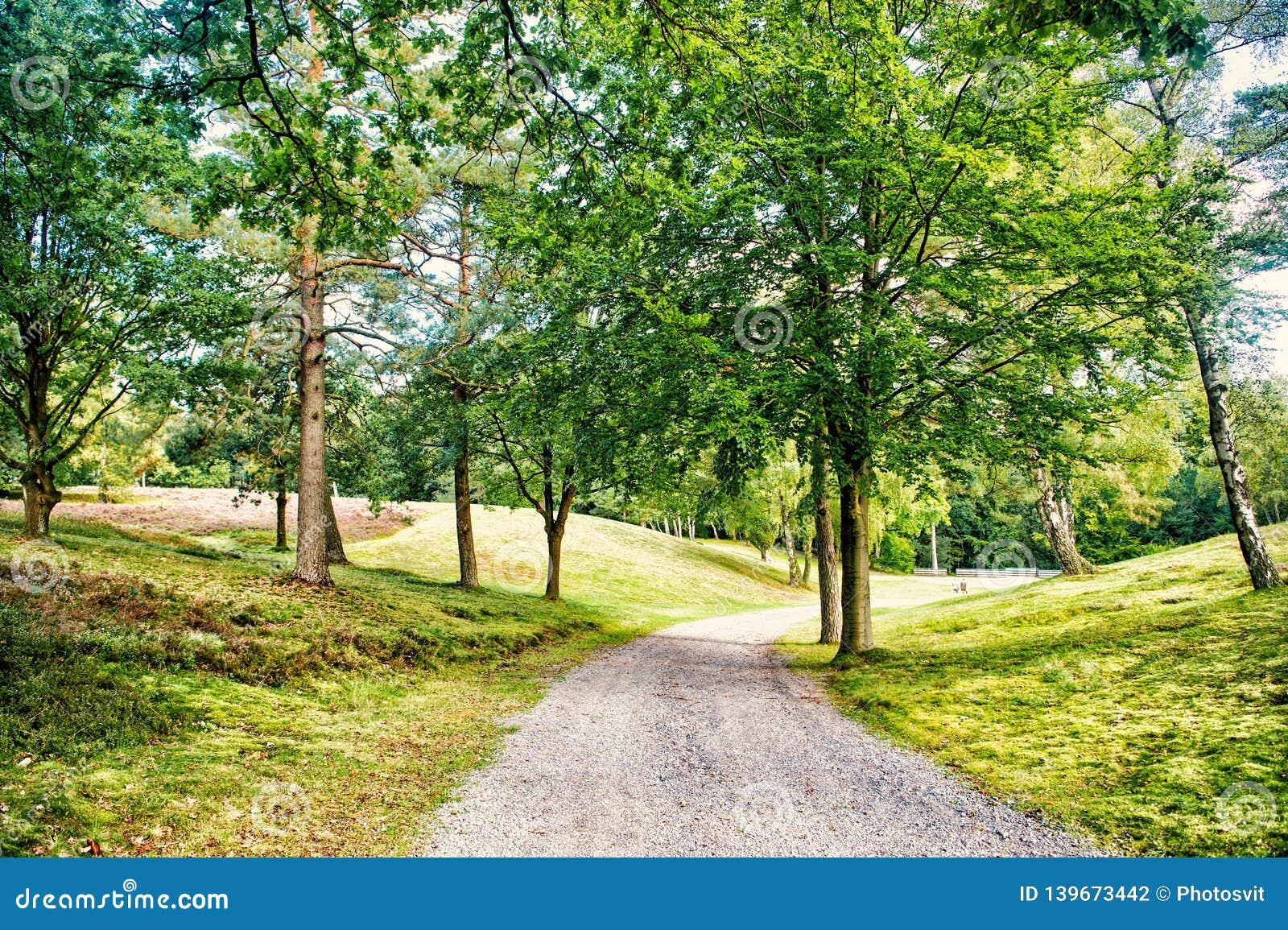 Ścieżka w wiosny lub lata lesie, natura Droga w drewno krajobrazie, środowisko Footpath wśród zielonych drzew, ekologia