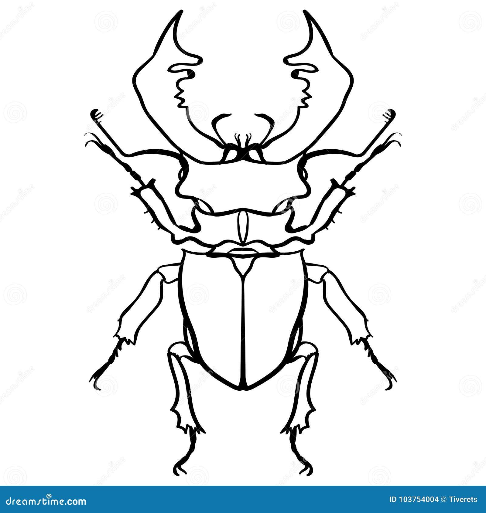 ściga rogacz żuk horn dużego insekta kreskowa sztuka
