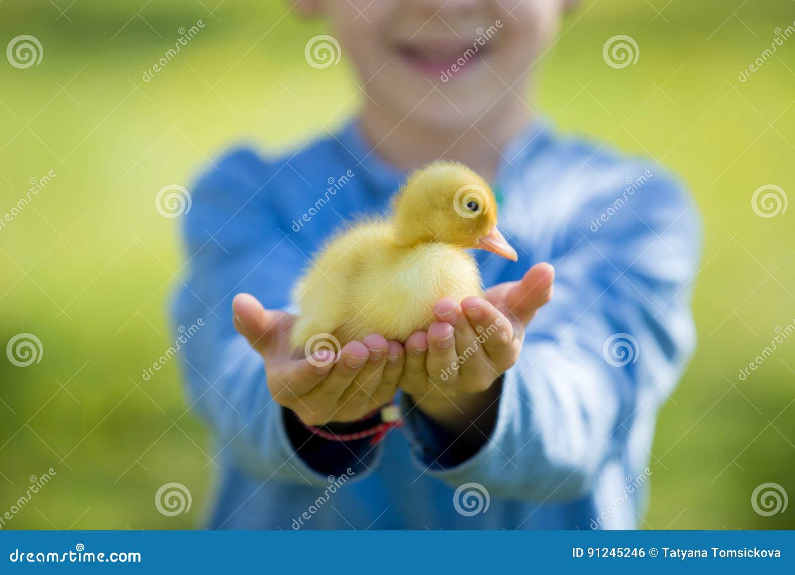 Śliczna chłopiec z kaczątko wiosną, bawić się wpólnie