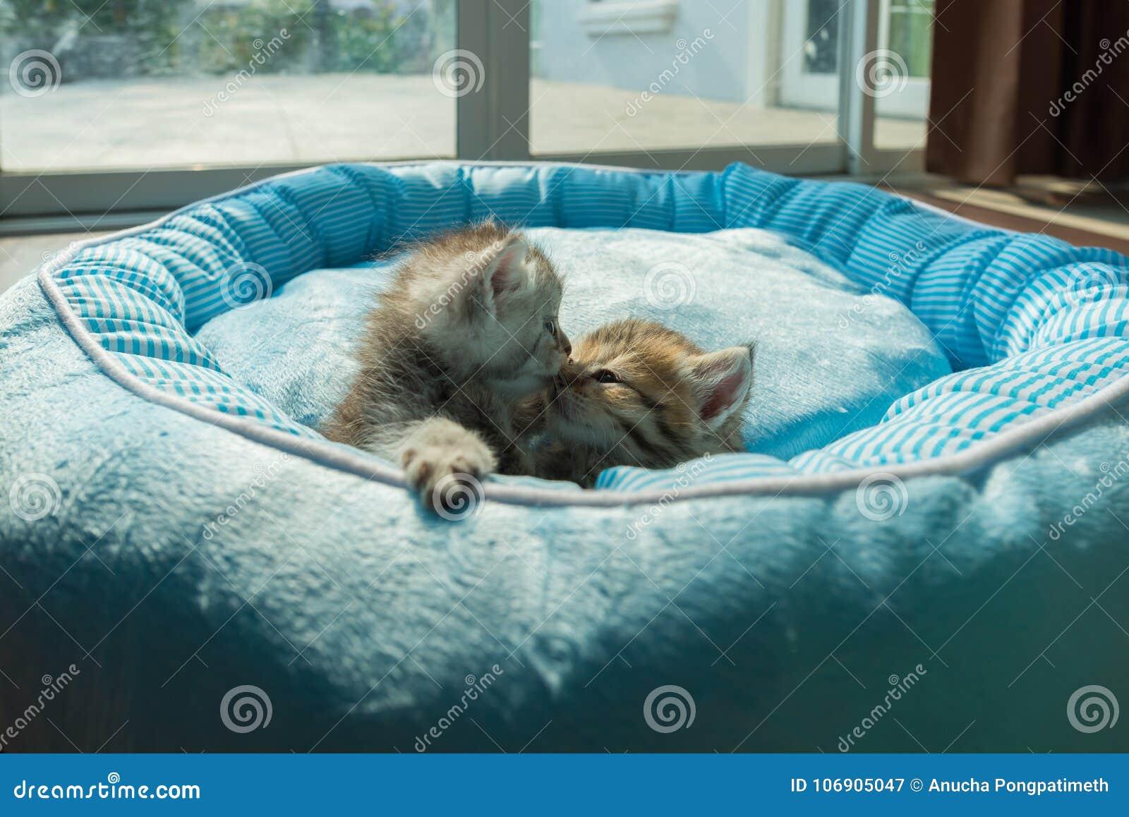 Śliczna figlarka na łóżku