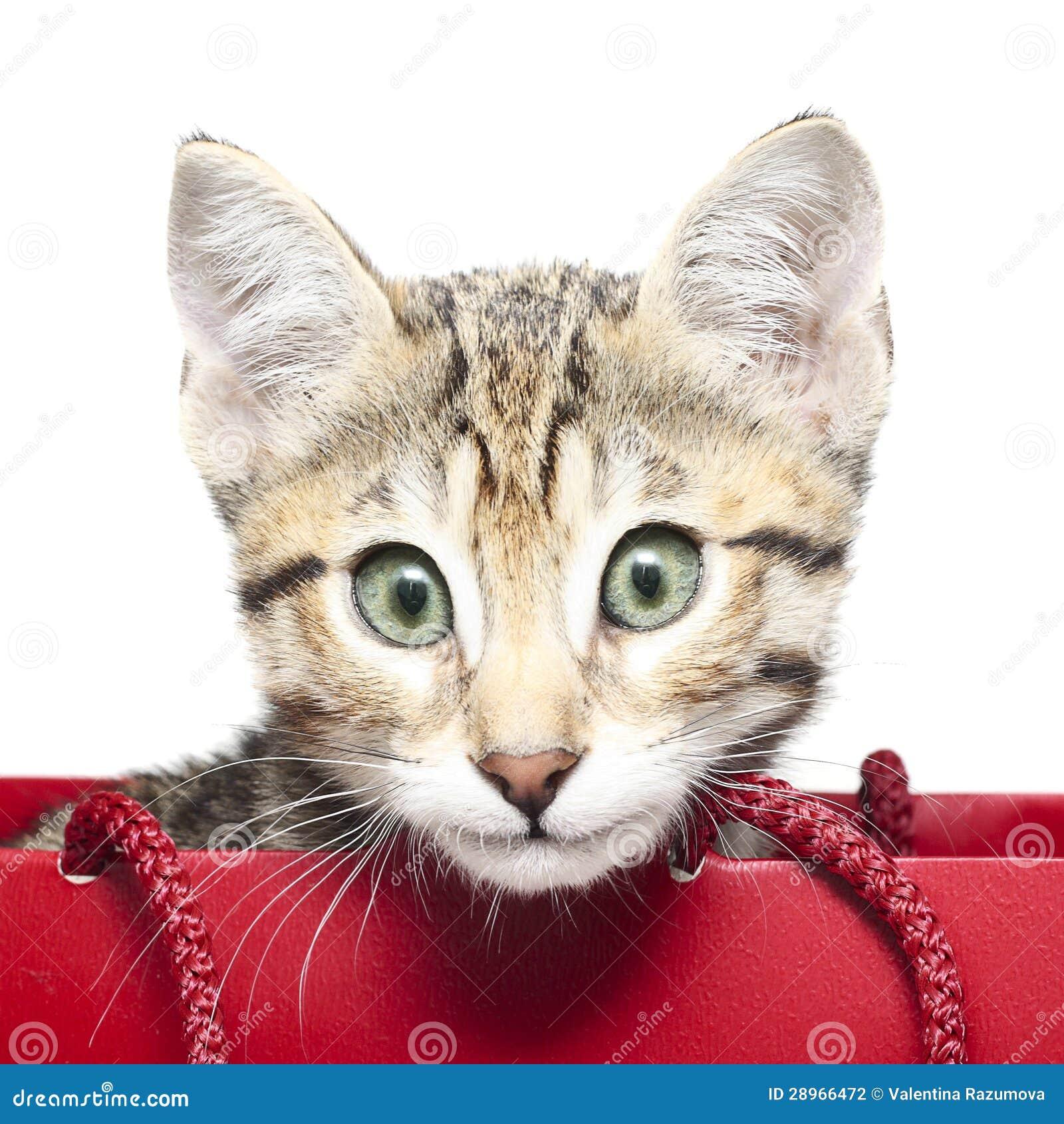 Śliczna figlarka w czerwonym torba na zakupy
