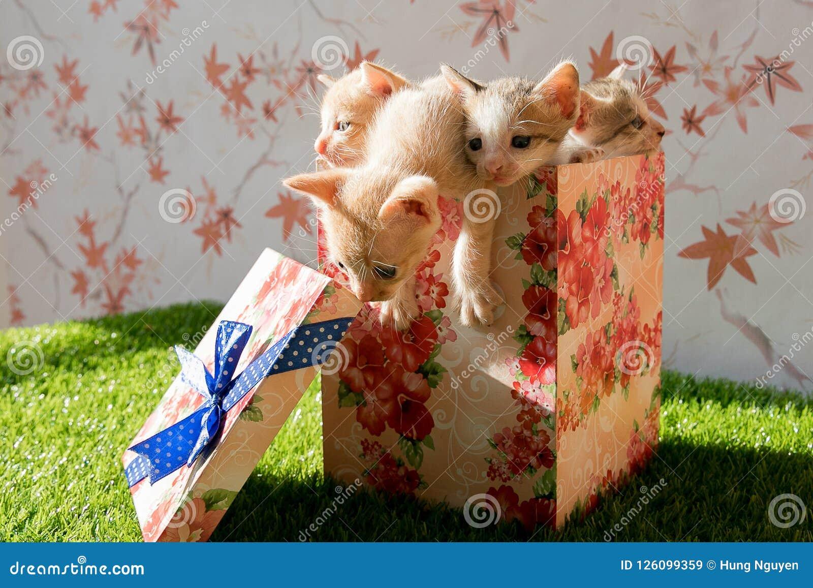Śliczne kiciunie stawiają wśrodku prezenta pudełka