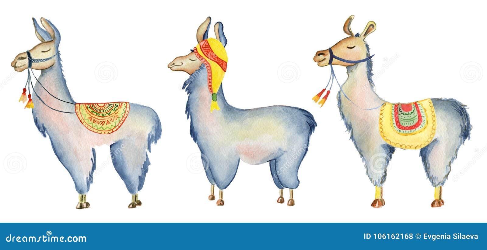Śliczni lam postać z kreskówki ustawiają akwareli ilustrację, Alpagowi zwierzęta, ręka rysujący styl Odosobniony biały tło