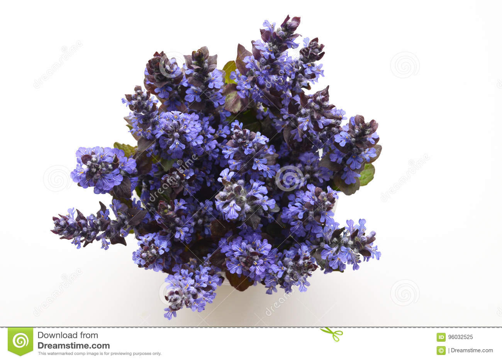 Śliczny bukiet lato wiosny kwiaty