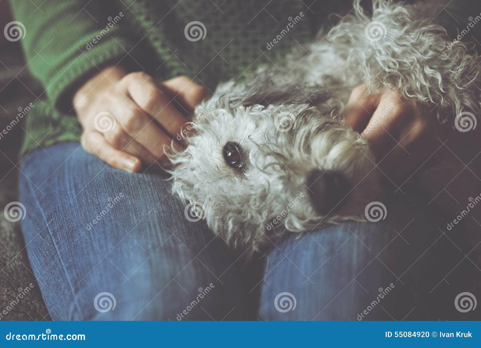 Śliczny choroba pies w rękach