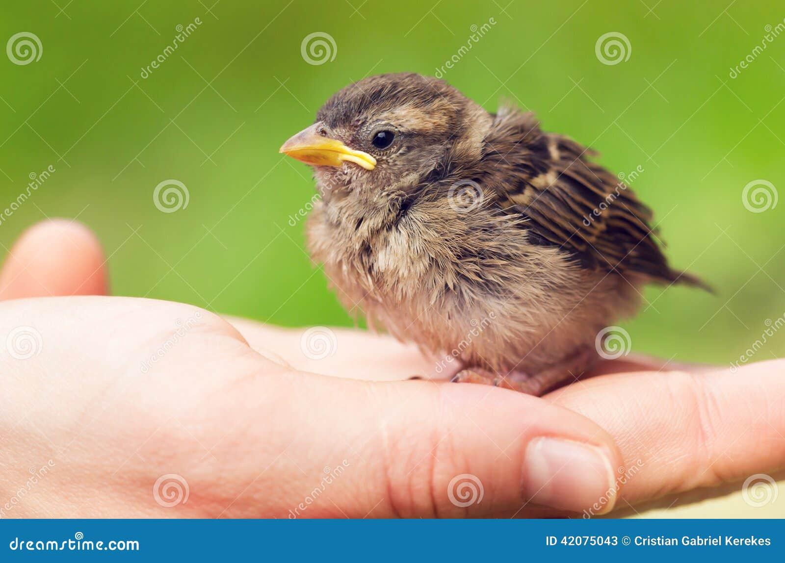 Śliczny dziecko wróbel w ręce