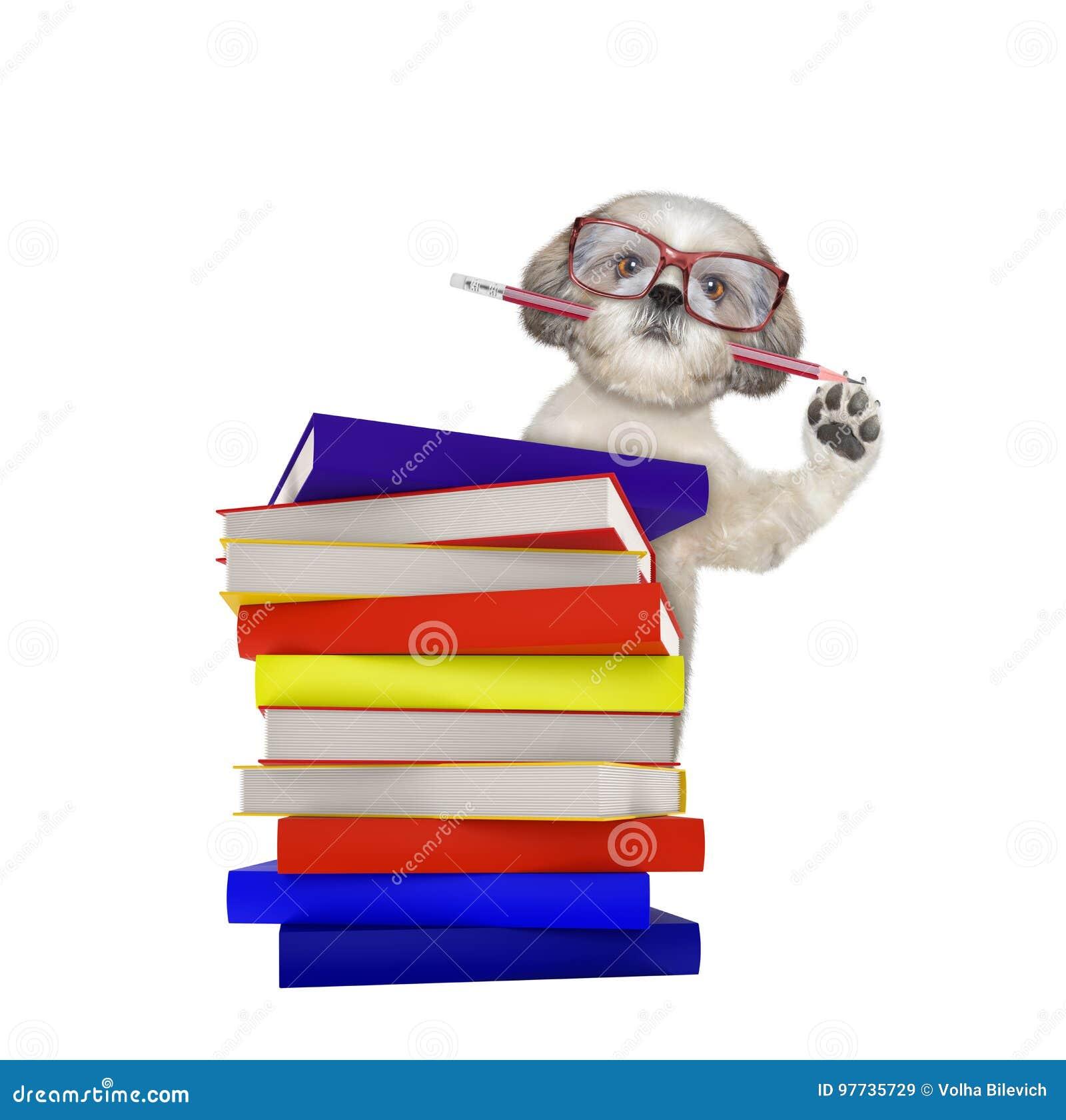 Śliczny inteligentny pies z książkami odizolowywać na bielu
