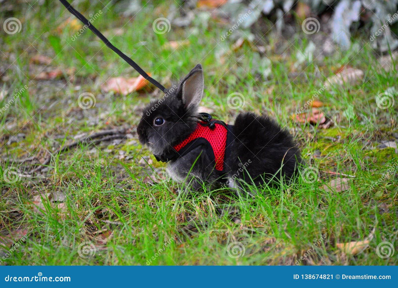 Śliczny mały czarny królik w zielonej trawie w parku