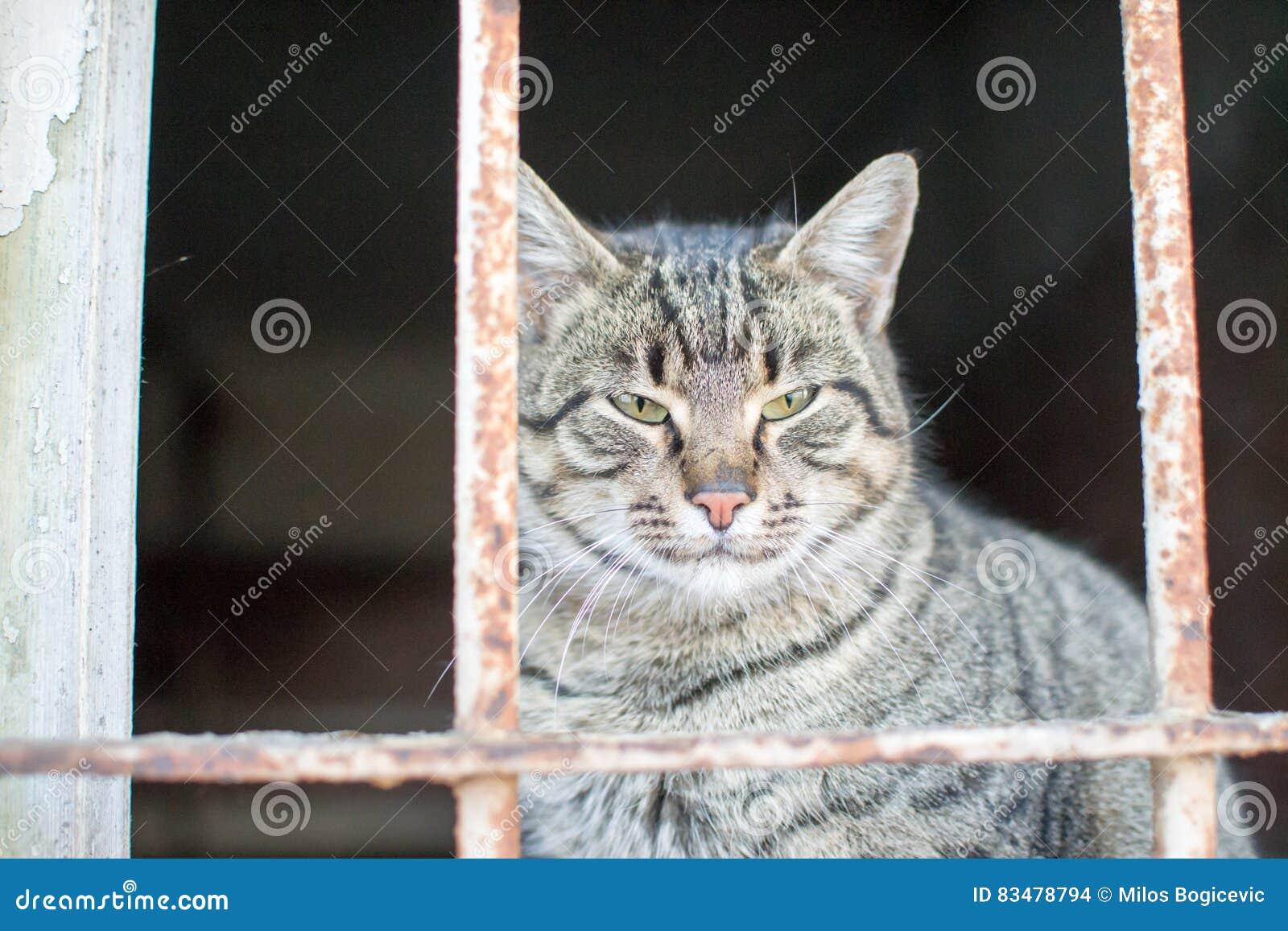 Śliczny mały kot pozuje dla fotografii