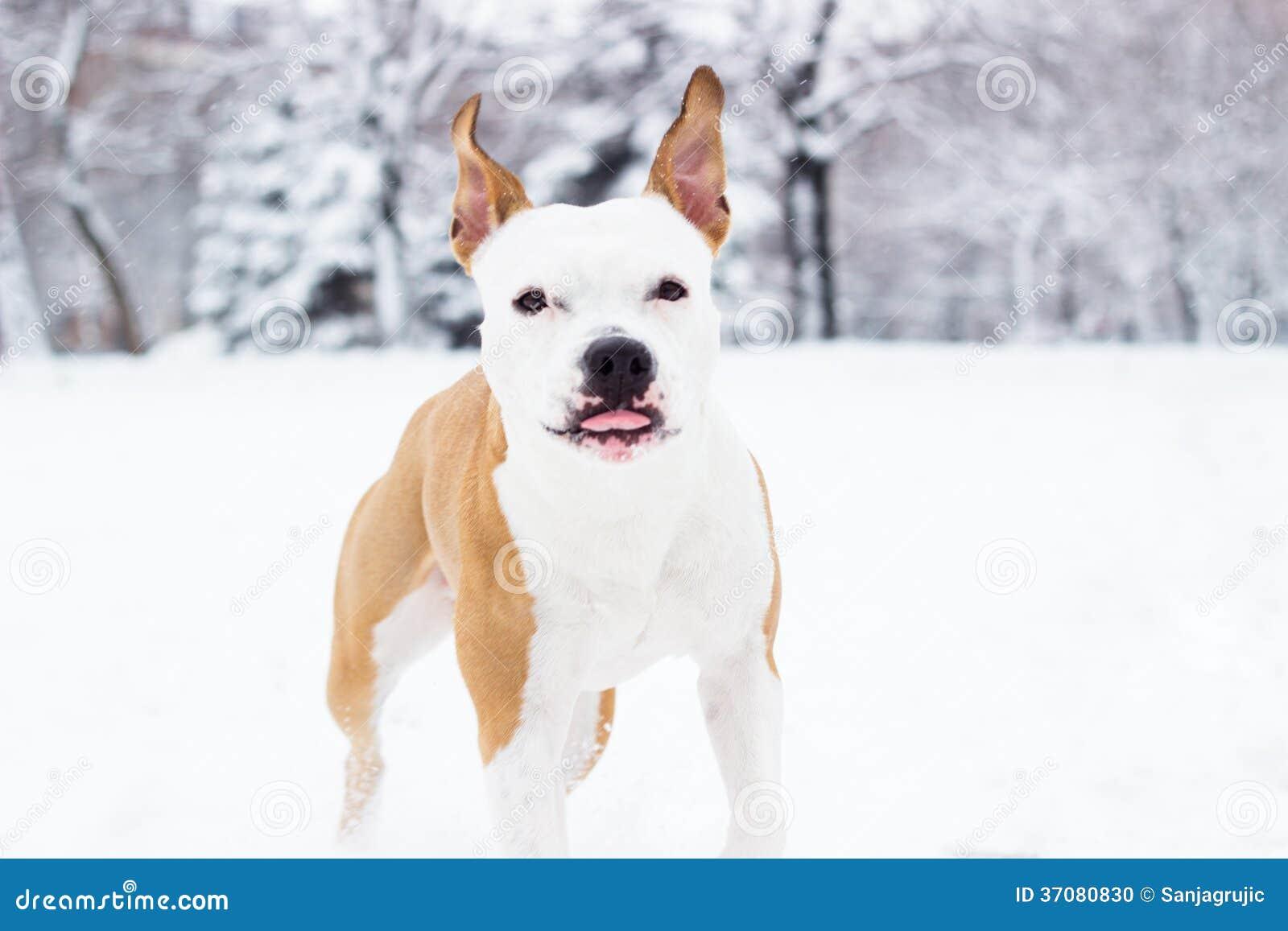 Download Śliczny Pies Cieszy Się śnieg Zdjęcie Stock - Obraz złożonej z ssak, aways: 37080830