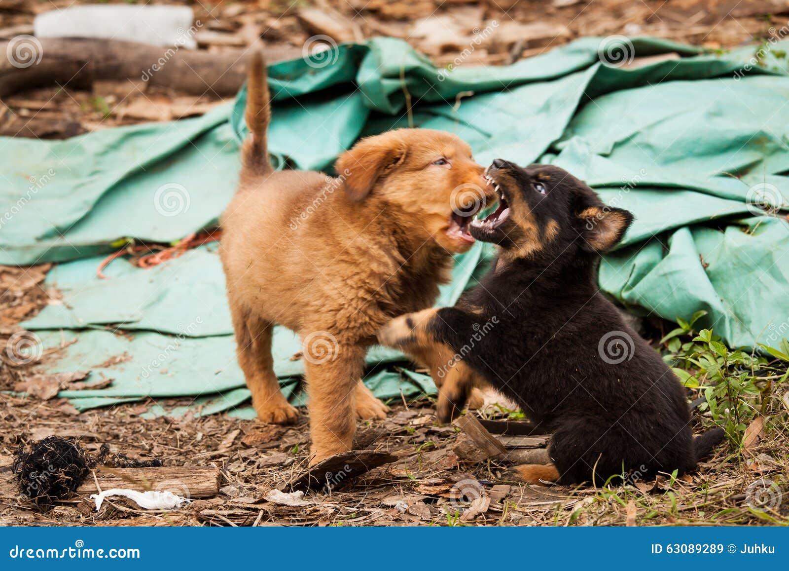 Śliczny przybłąkany szczeniaków bawić się