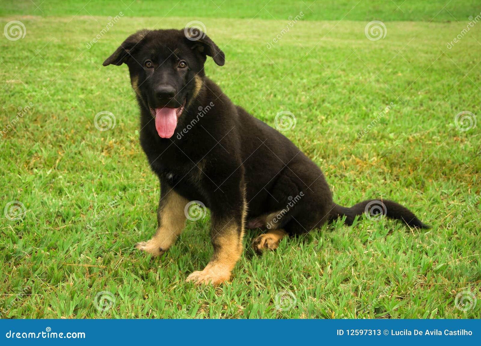 śliczny psi mały szczeniak