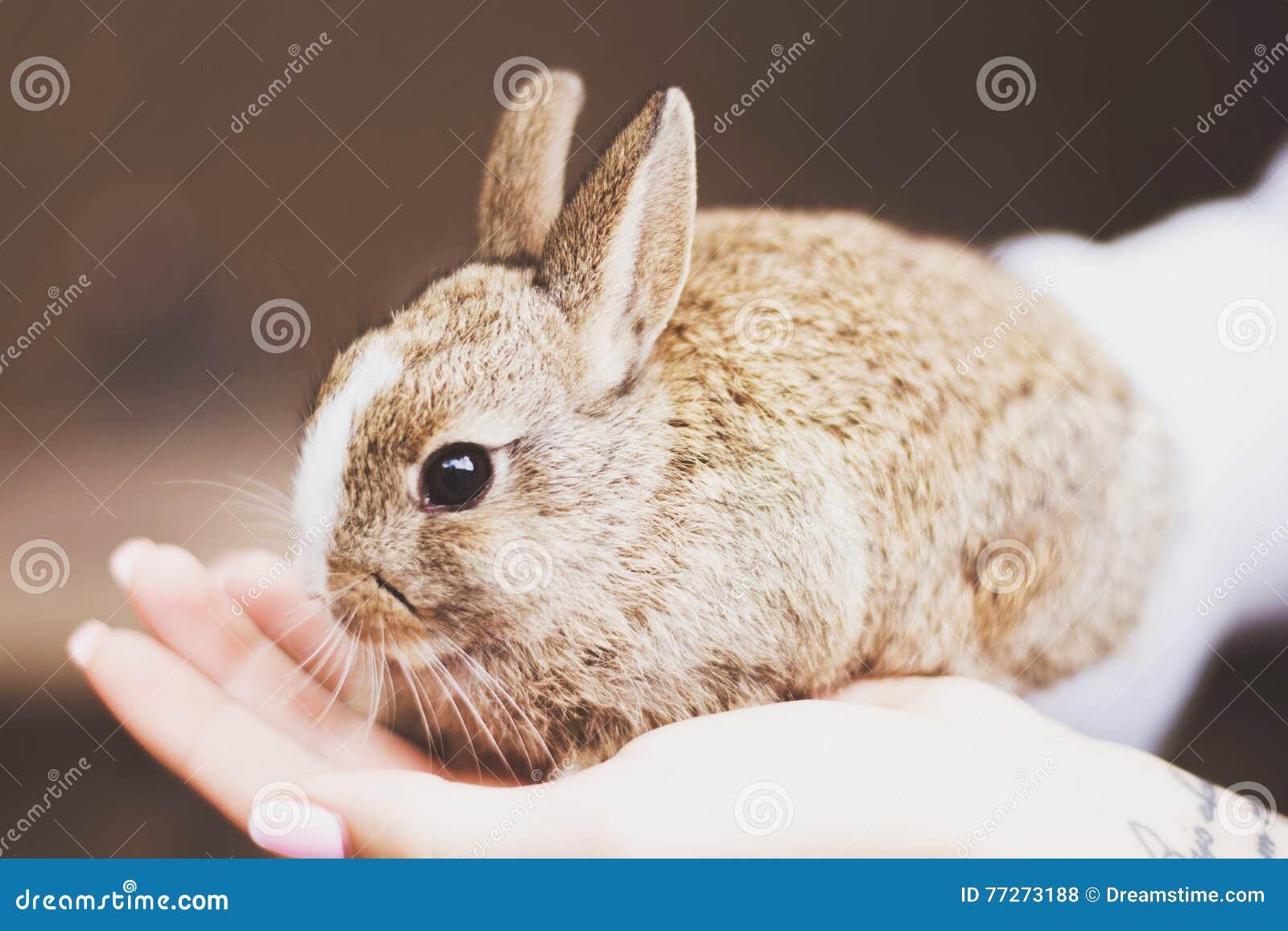 Śliczny słodki brown królik