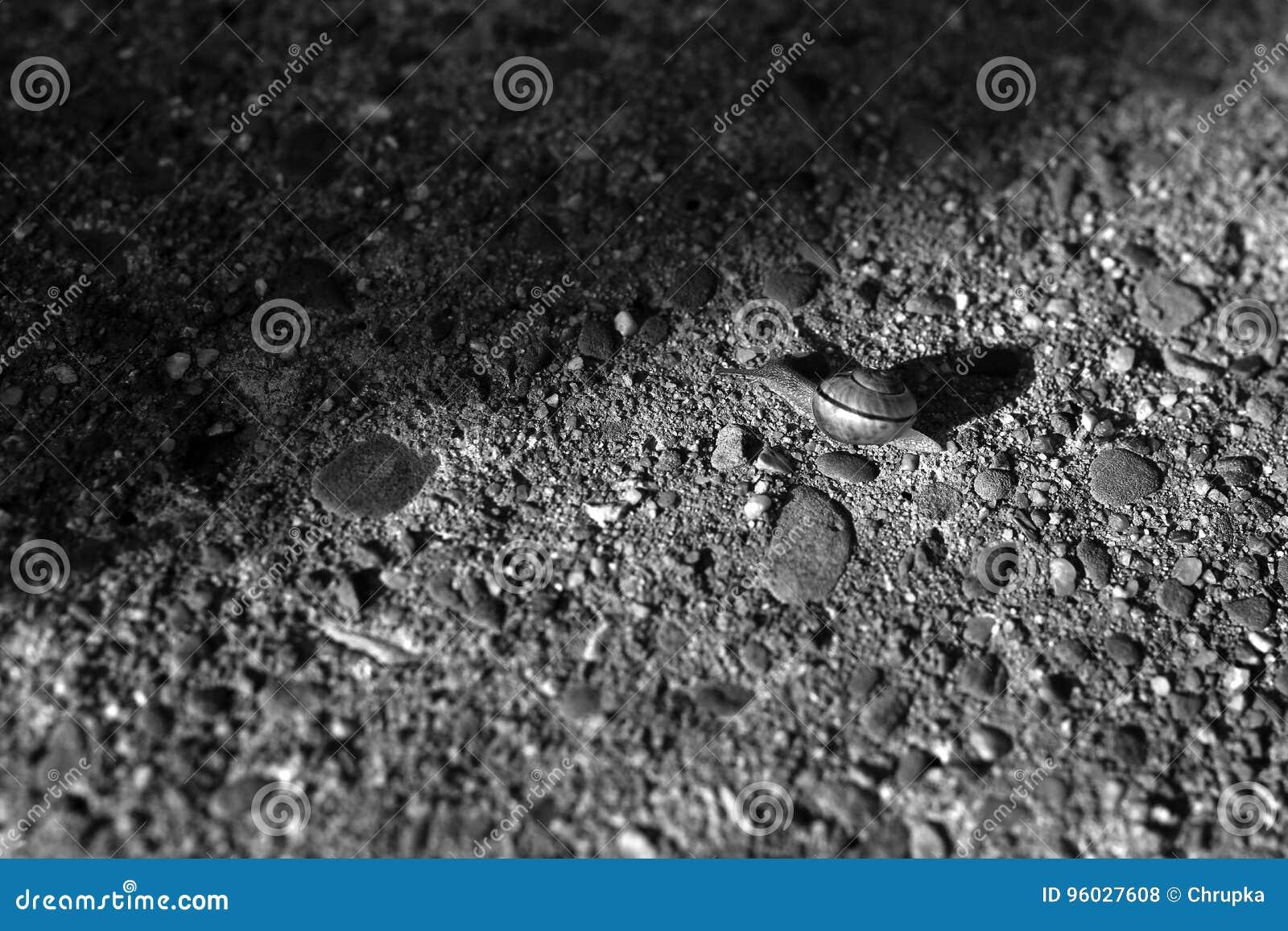 Ślimaczek na kamiennym tle