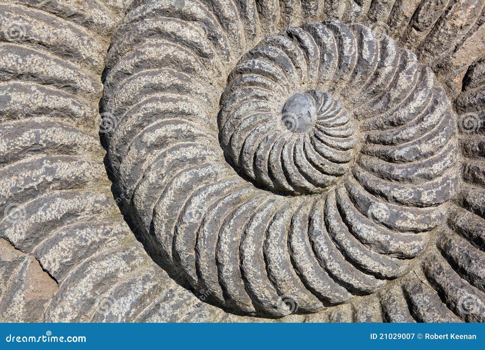 ślimaczek spirala