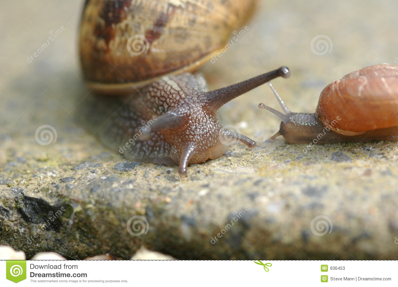 ślimaków