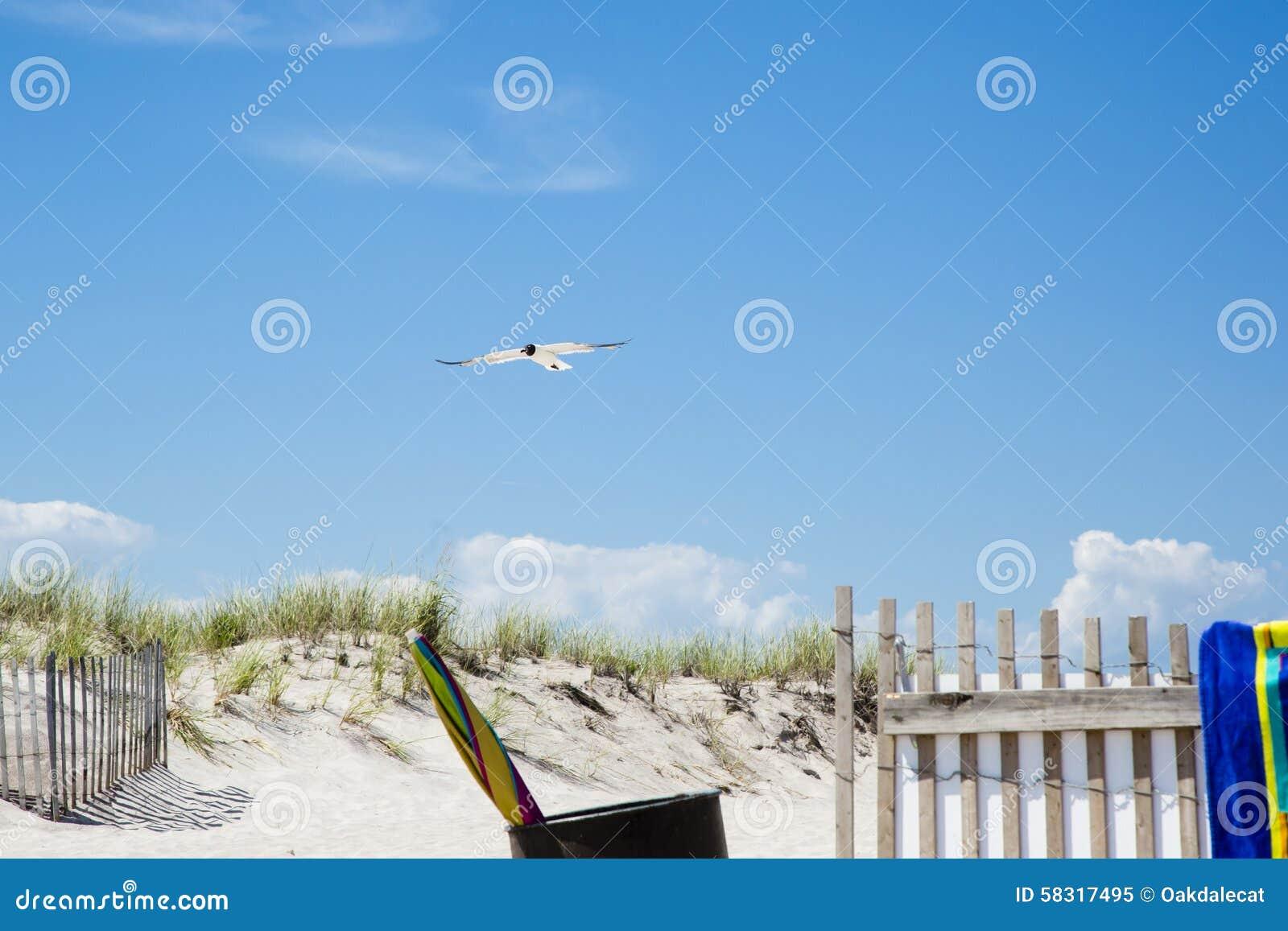 Śmiać się Gul Pływa statkiem nad Plażowym wejściem