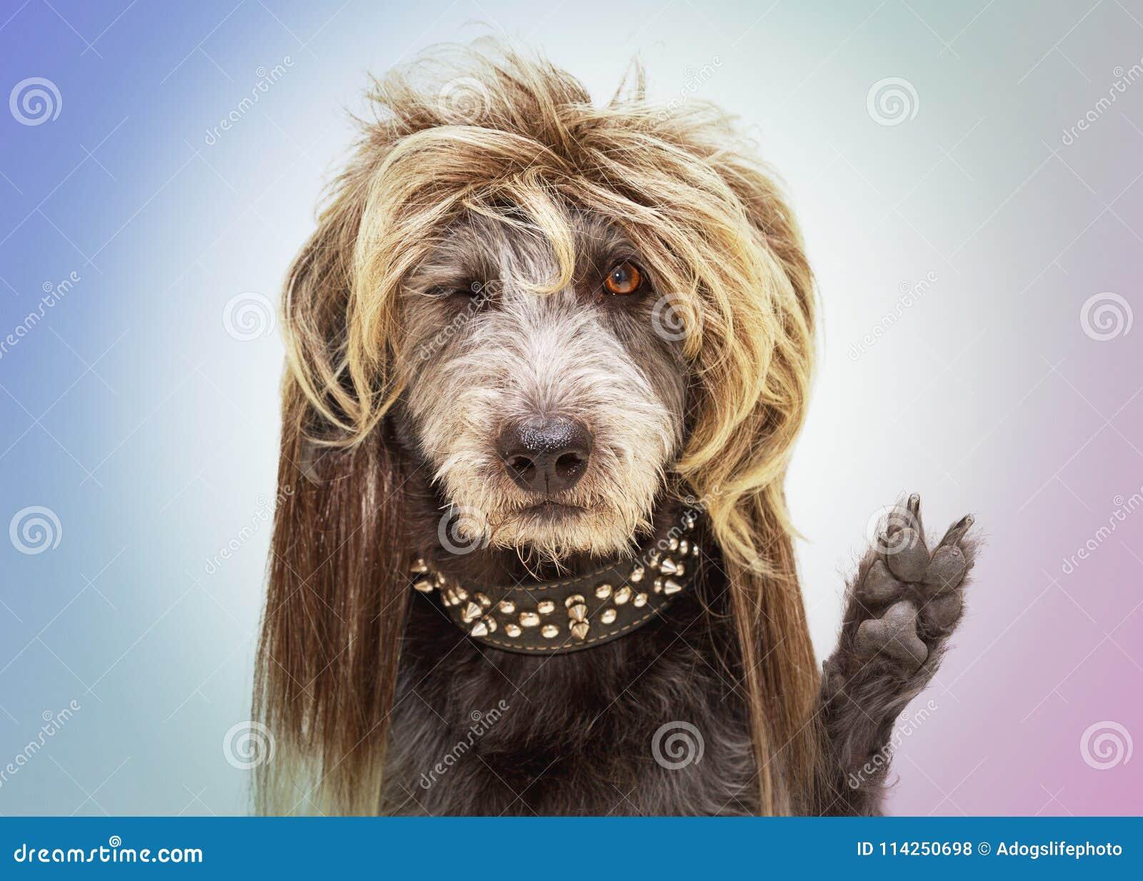 Śmieszna bujaka psa łapa w pokoju znaku