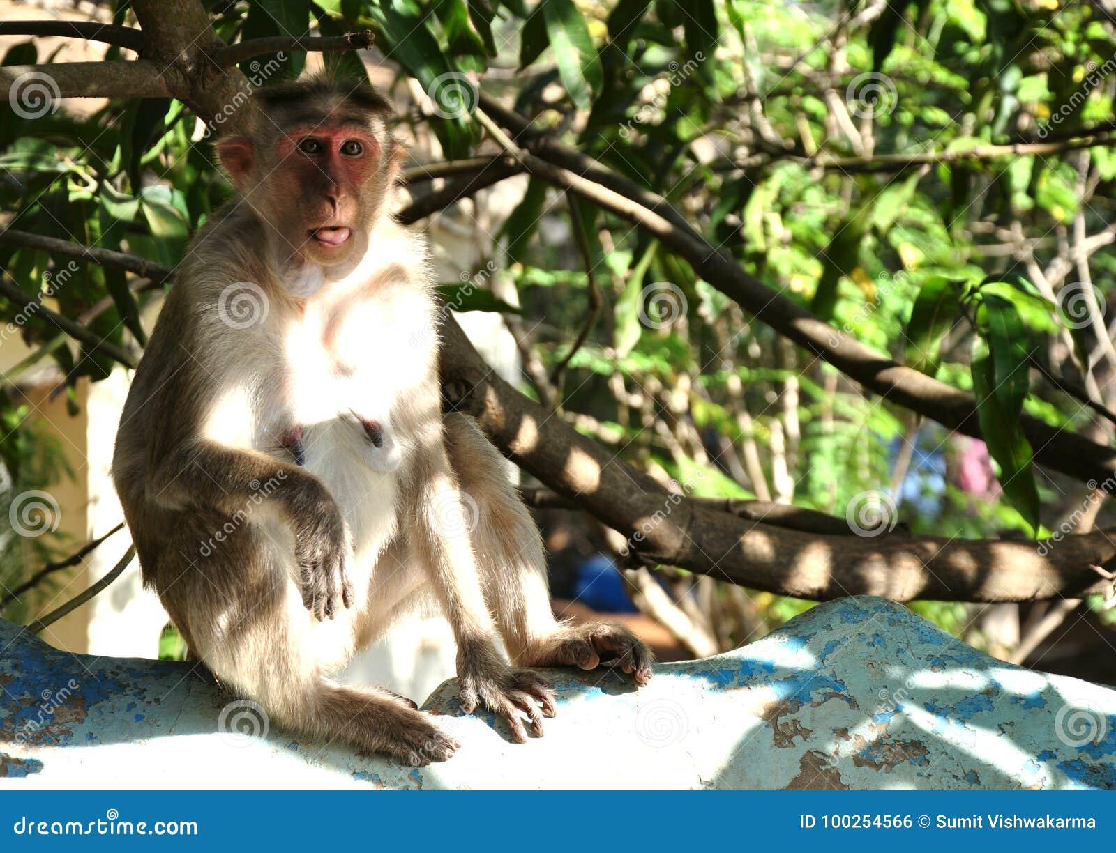 Śmieszna małpa z zdziwioną twarzą