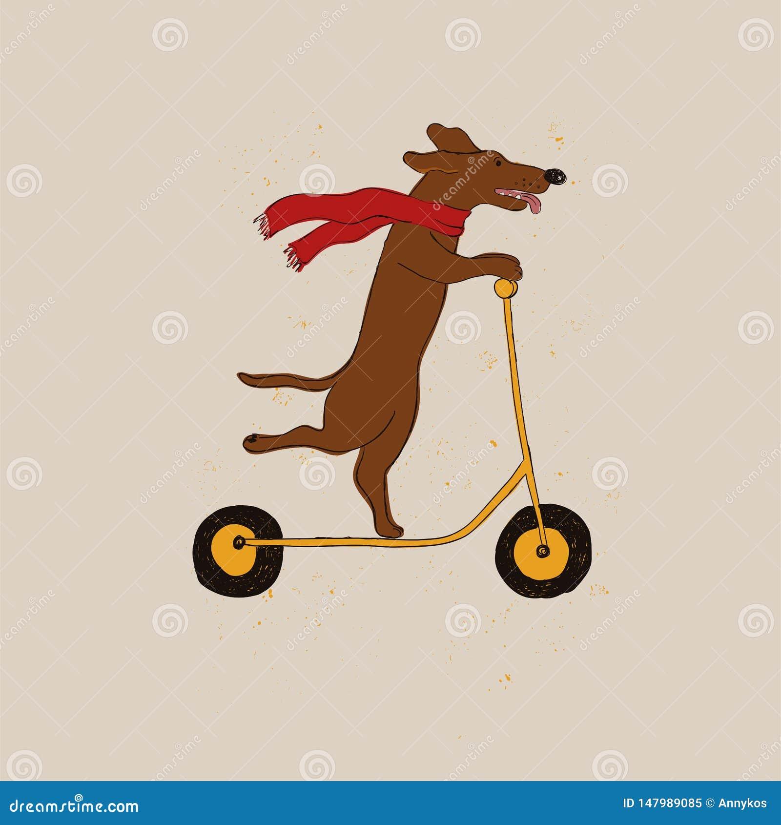 Śmiesznego jamnika psa Jeździecka hulajnoga