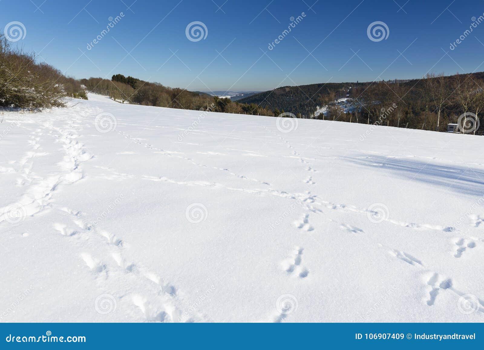 Śmieszni śniegów ślada w Eifel, Niemcy
