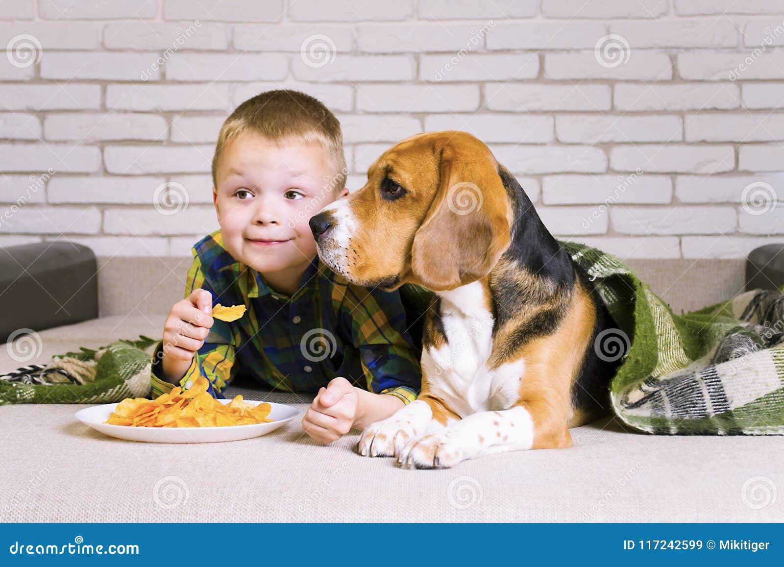 Śmieszni chłopiec i psa Beagle łasowania układy scaleni