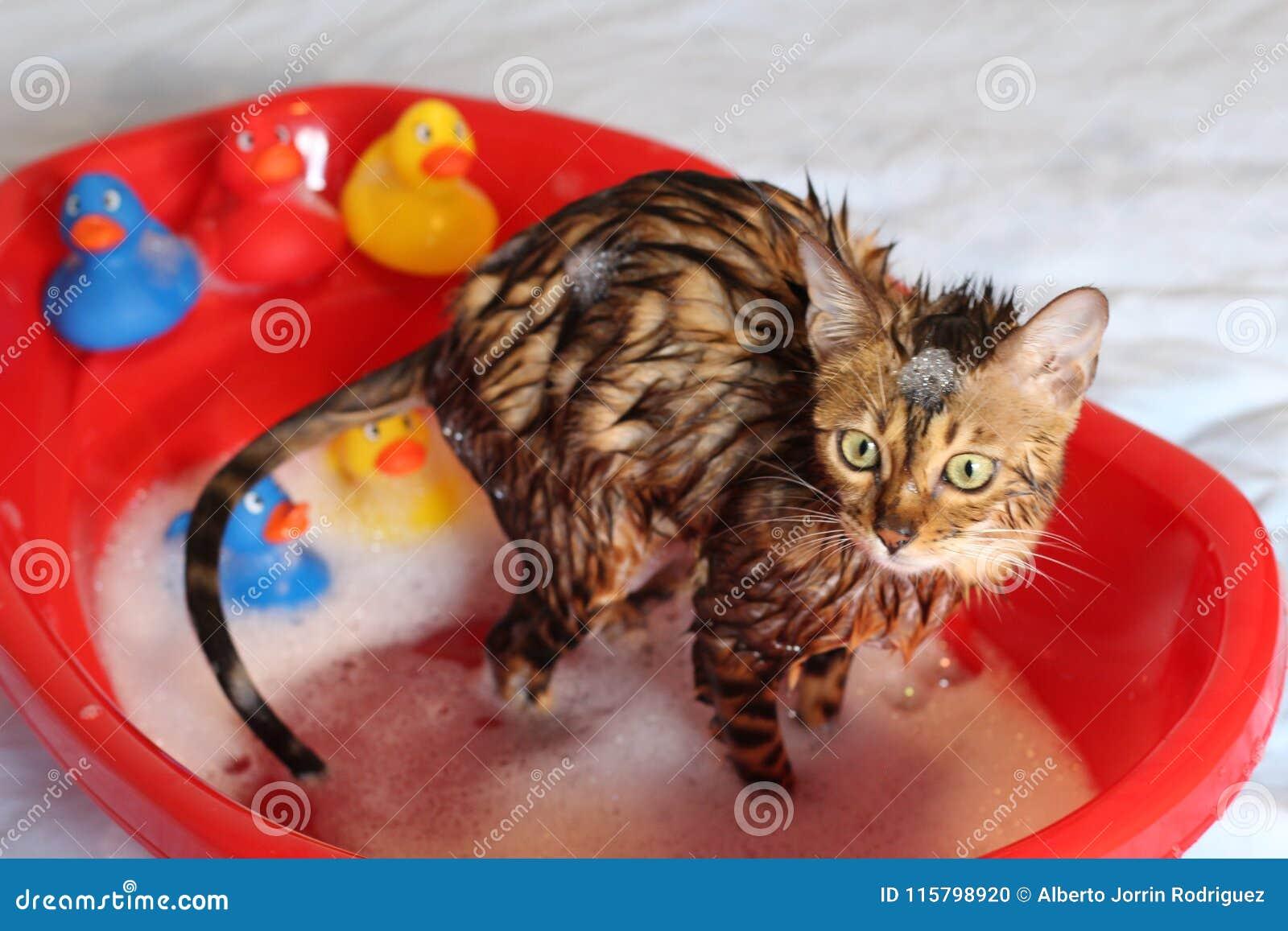 Śmieszny kot bierze skąpanie