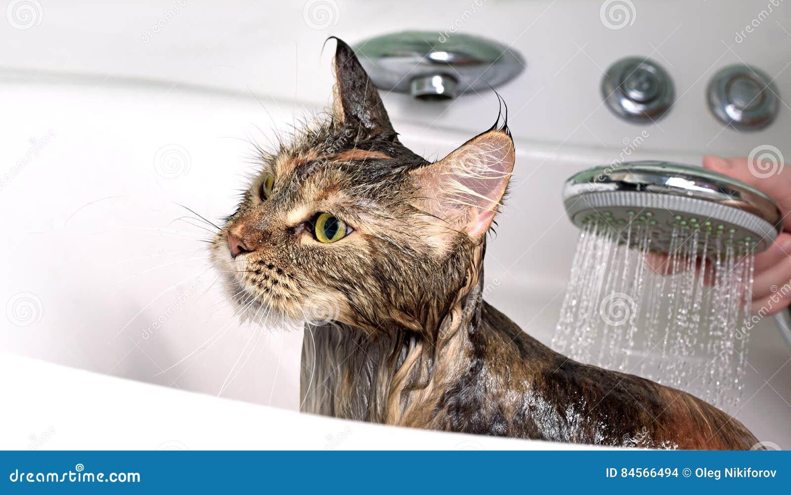 Śmieszny kota skąpanie