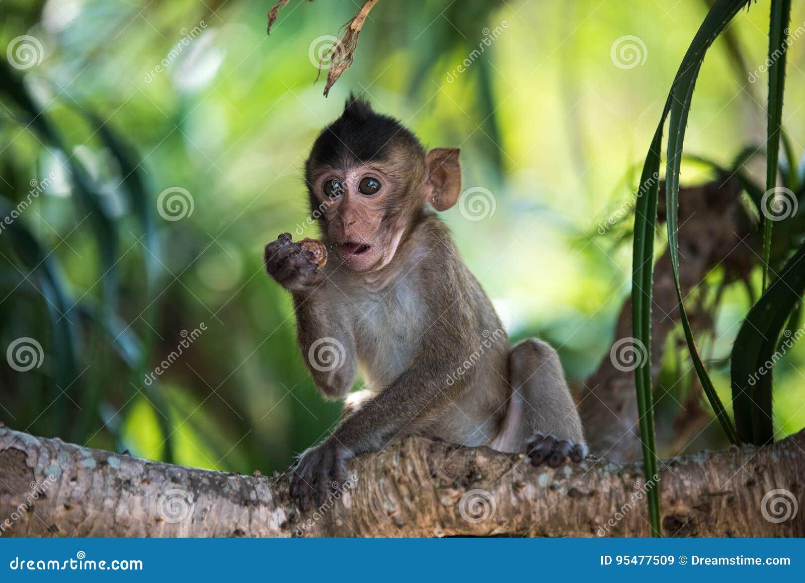 Śmieszny małpi dziecko na drzewie