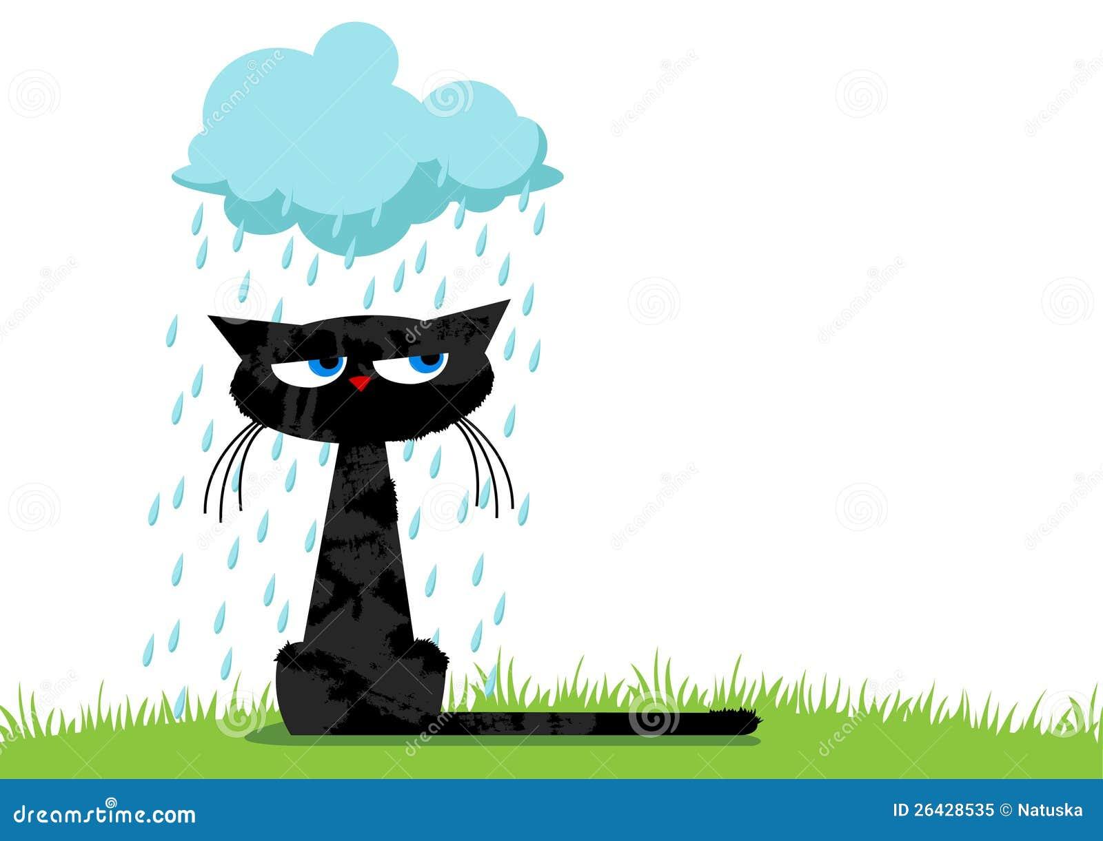 Śmieszny nieszczęśliwy kot