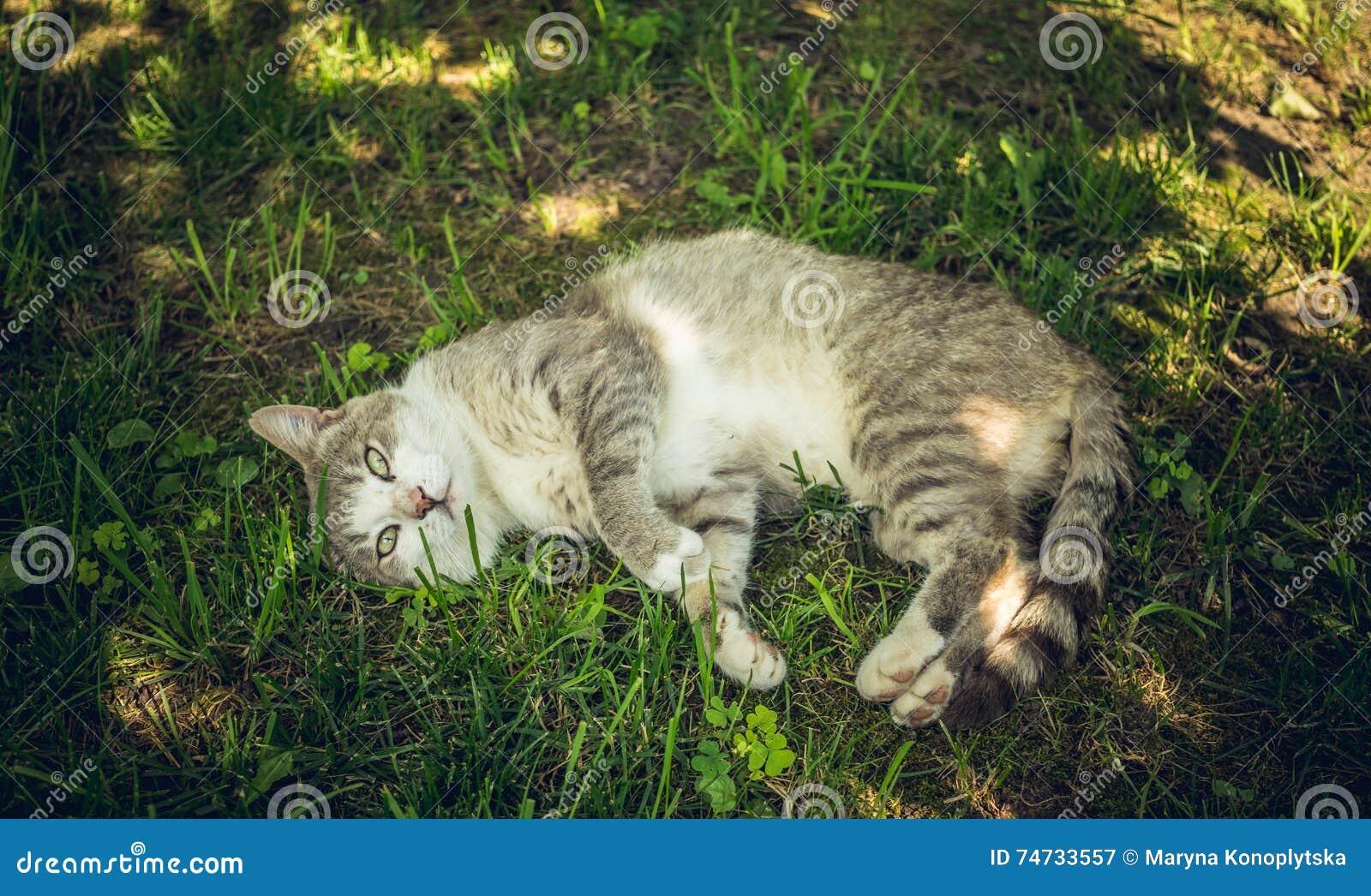 Śmieszny okaleczający kot