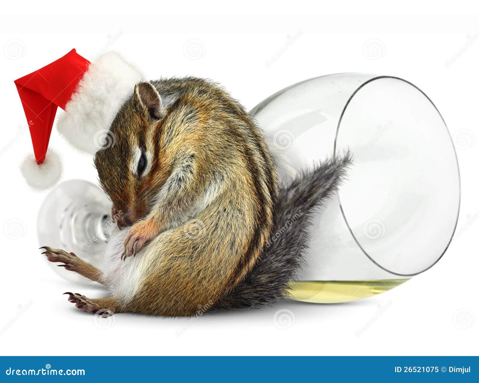 Śmieszny pijący chipmunk sukni Santa kapelusz
