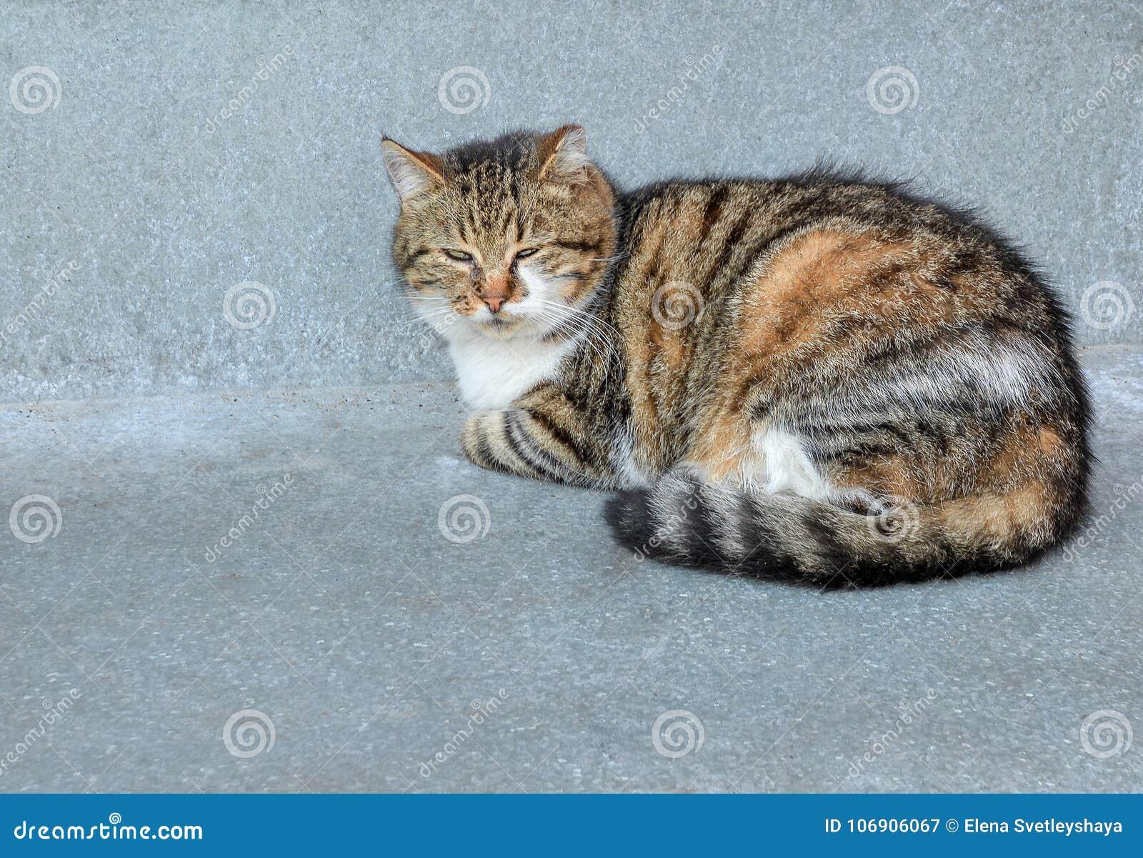 Śmieszny przybłąkany młody kot kłaść na popielatym tle Puszysty tabby kota lying on the beach i patrzeć kamerę blisko do kota