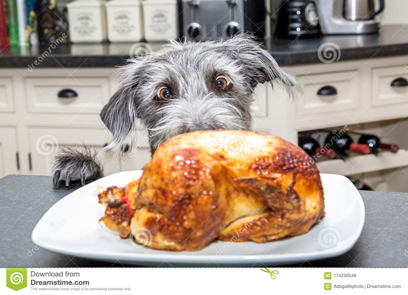 Śmieszny Z podnieceniem pies Kraść jedzenie Od kontuaru