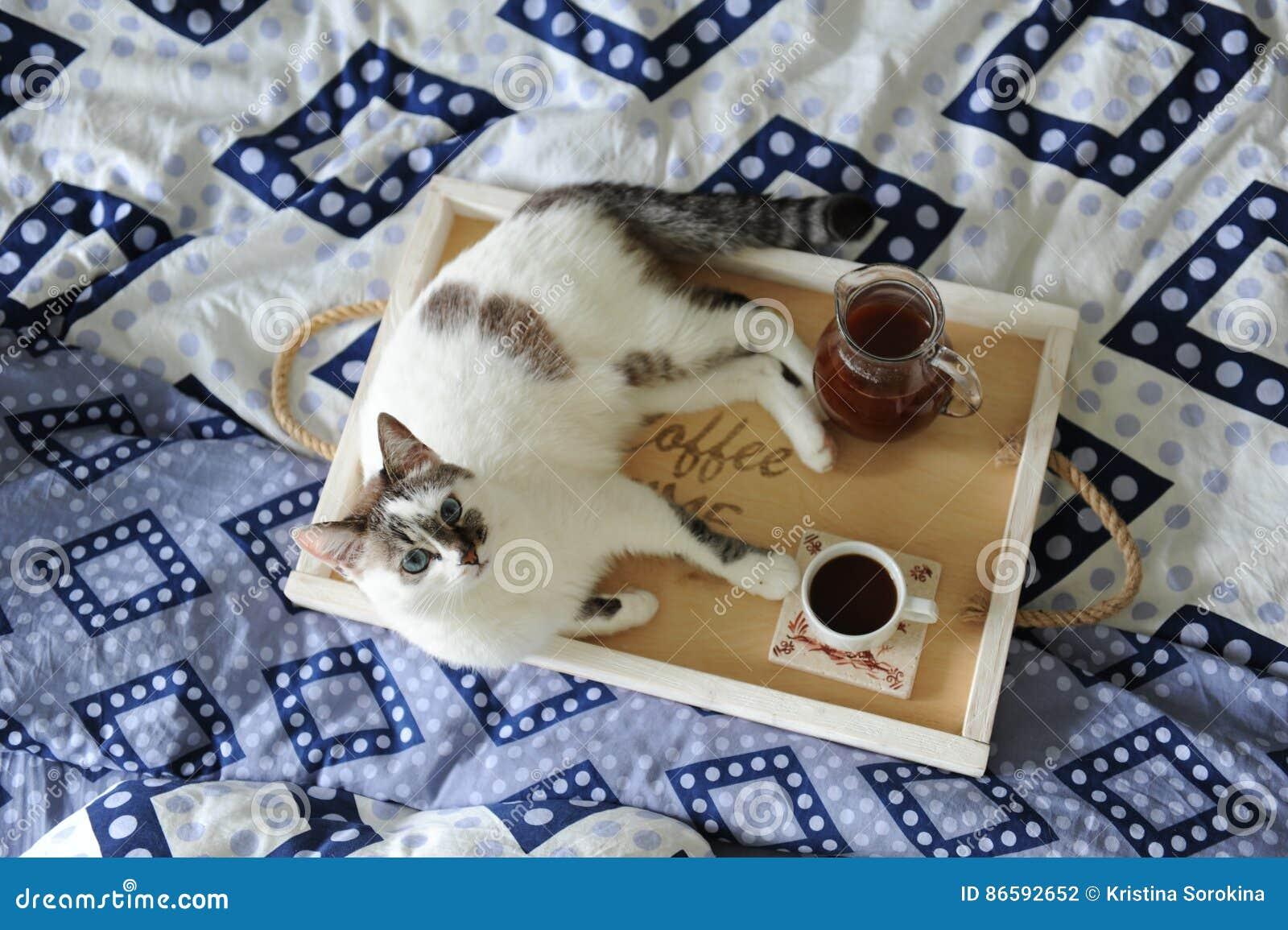śniadanie W łóżku Dzbanek I Filiżanka Kawy Na Drewnianej