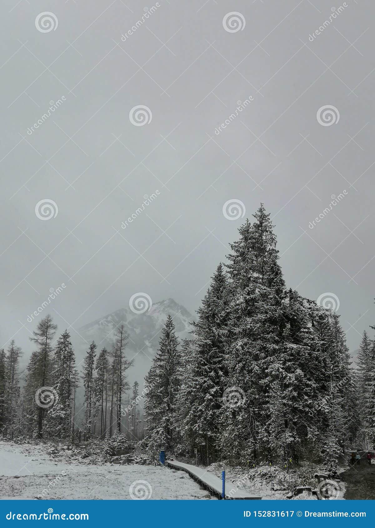Śnieżne góry, opad śniegu lasowe ścieżki, drzewa
