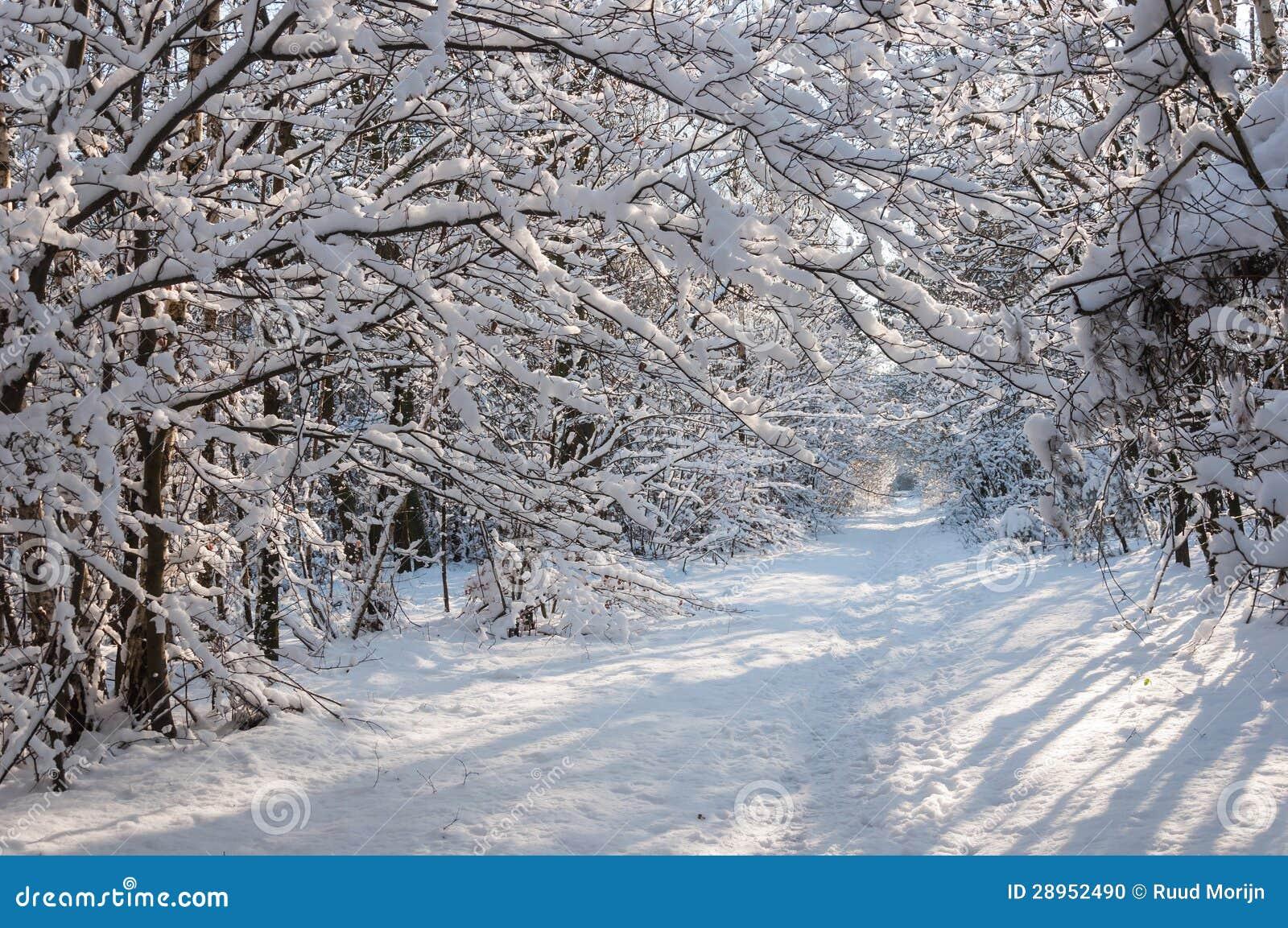 Śnieżne gałąź nad lasowy ślad