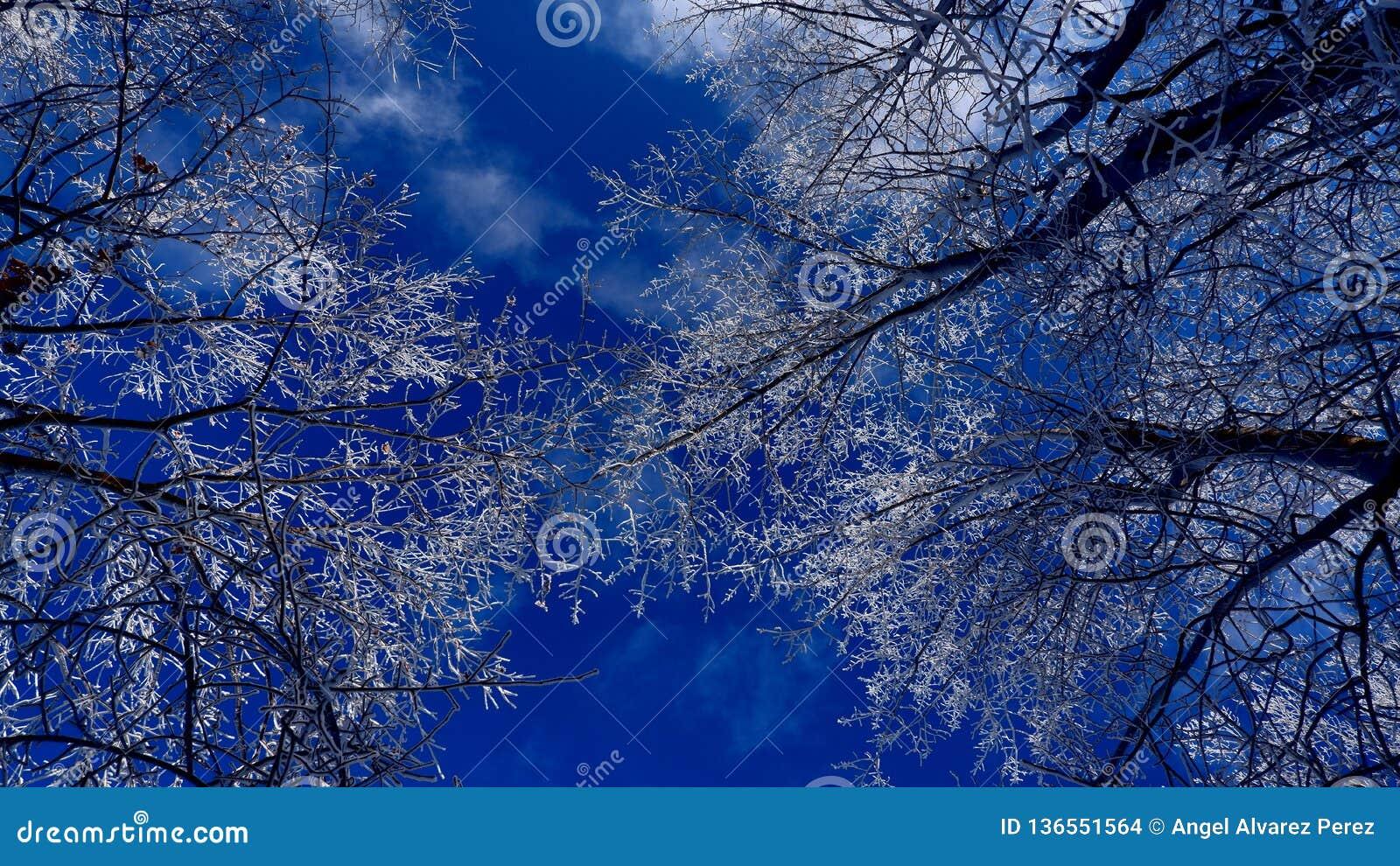 Śnieżne gałąź pod pięknym niebieskim niebem