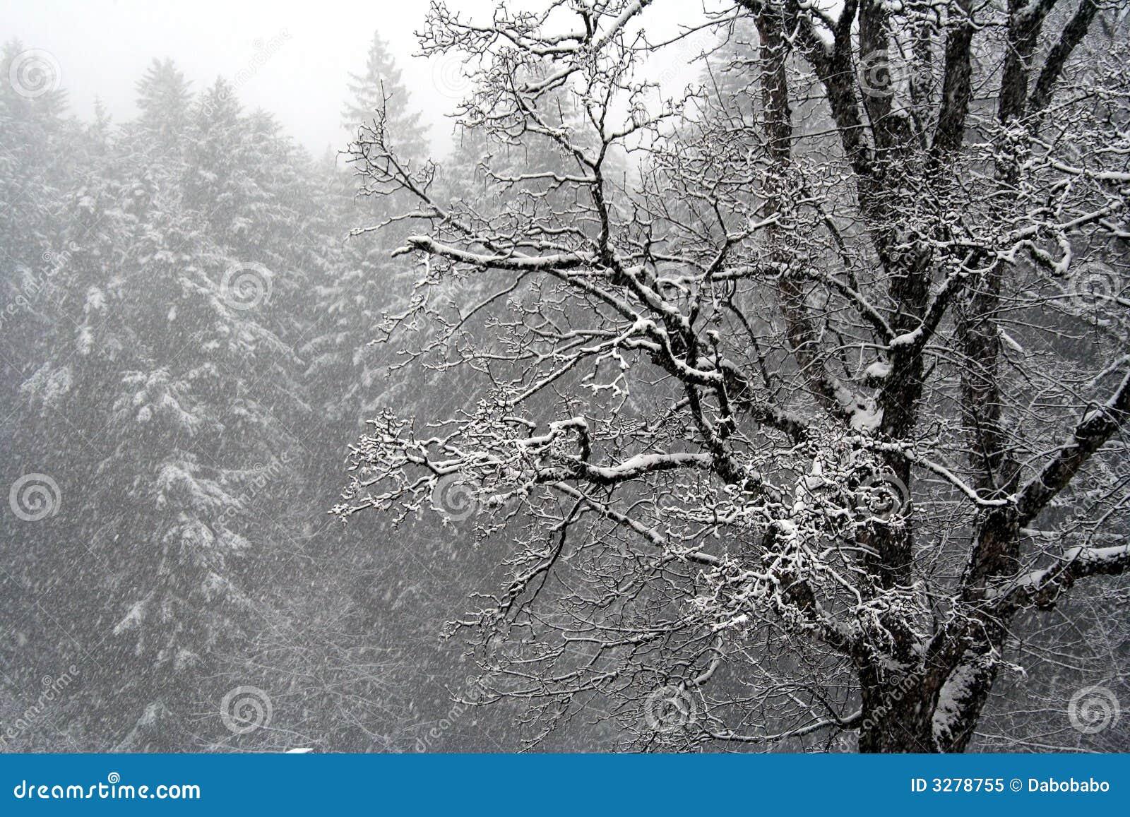 Śnieżny dzień
