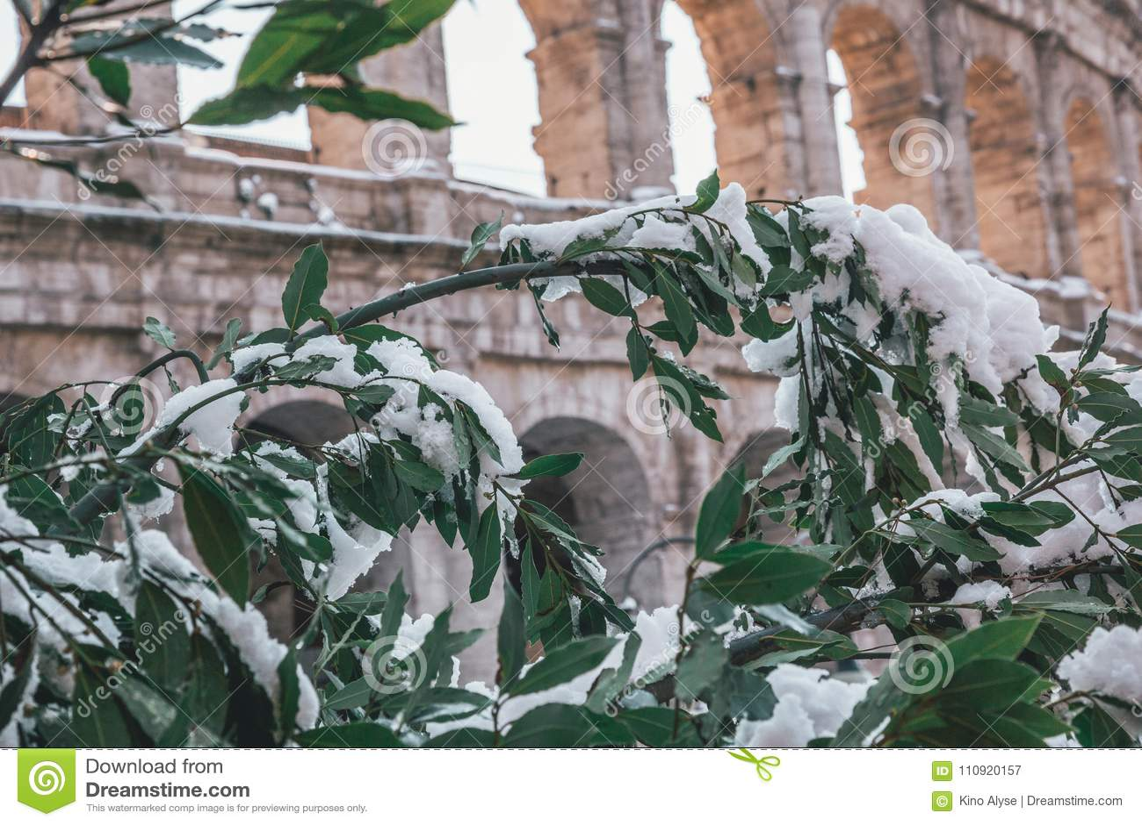 śnieżyści drzewa przy kolosseumem
