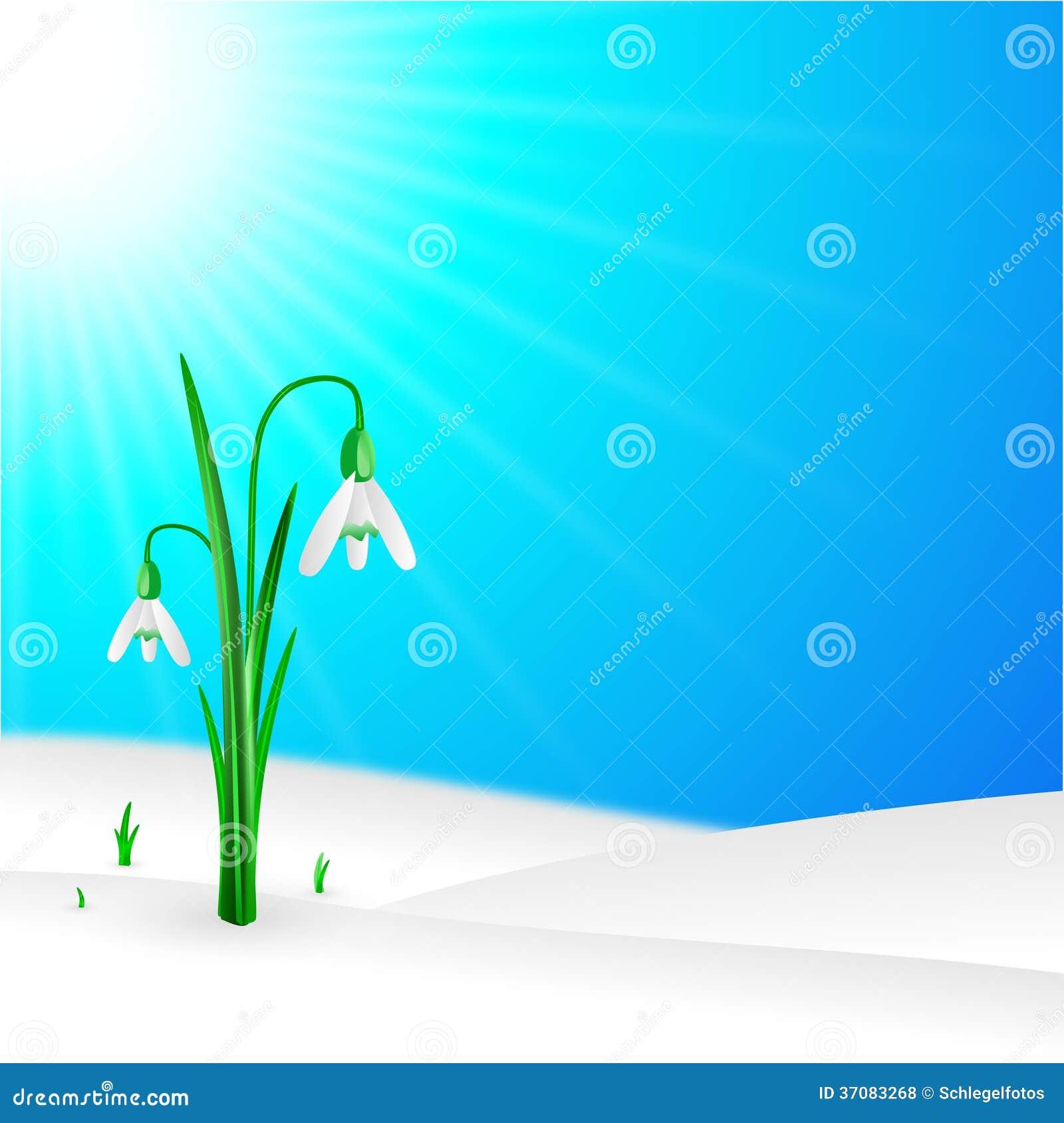 Download Śnieżyczka W Naturze Na Niebie Ilustracji - Ilustracja złożonej z świeży, roślina: 37083268