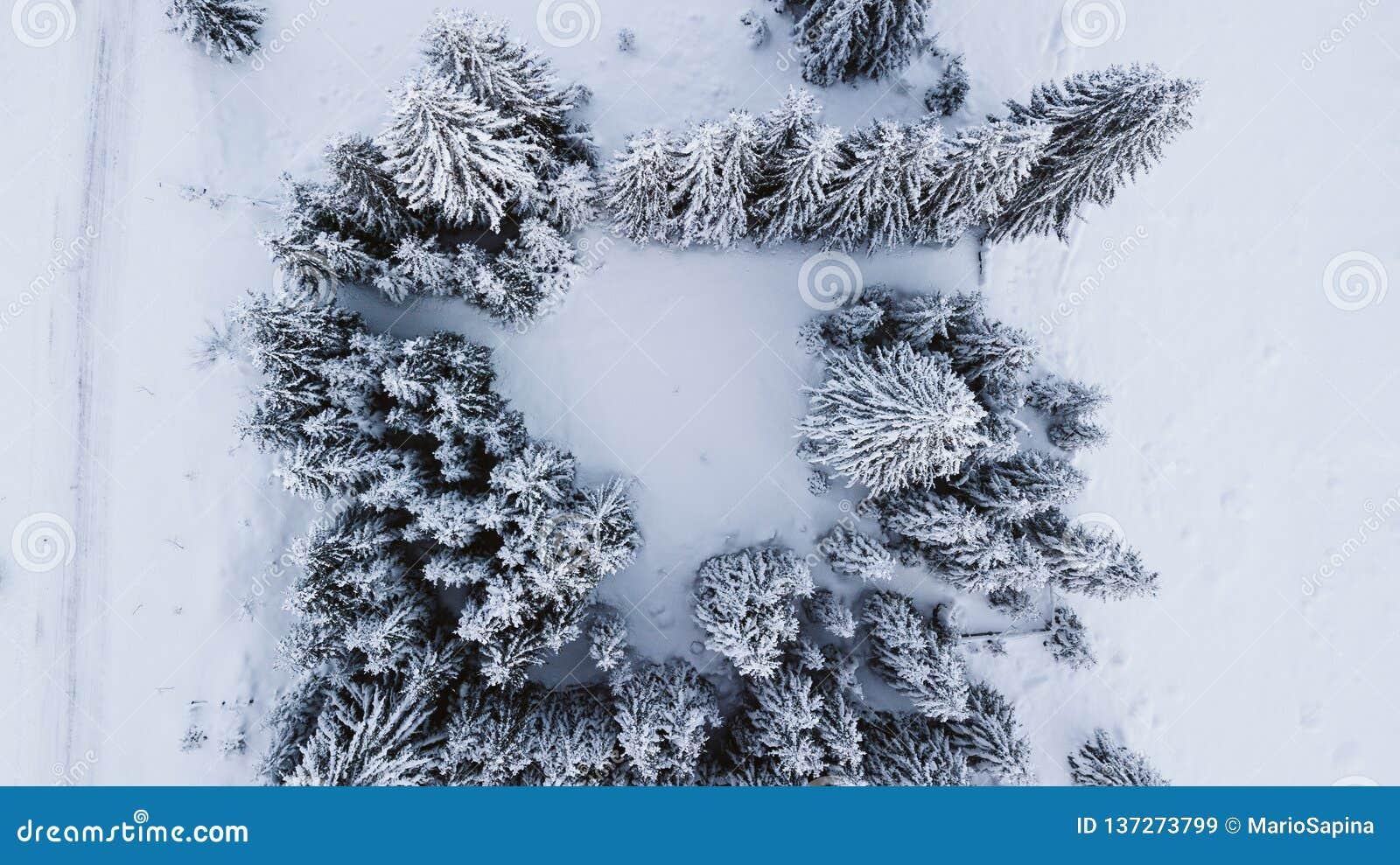 Śnieżyste sosny na górze góry, fotografującej od powietrza