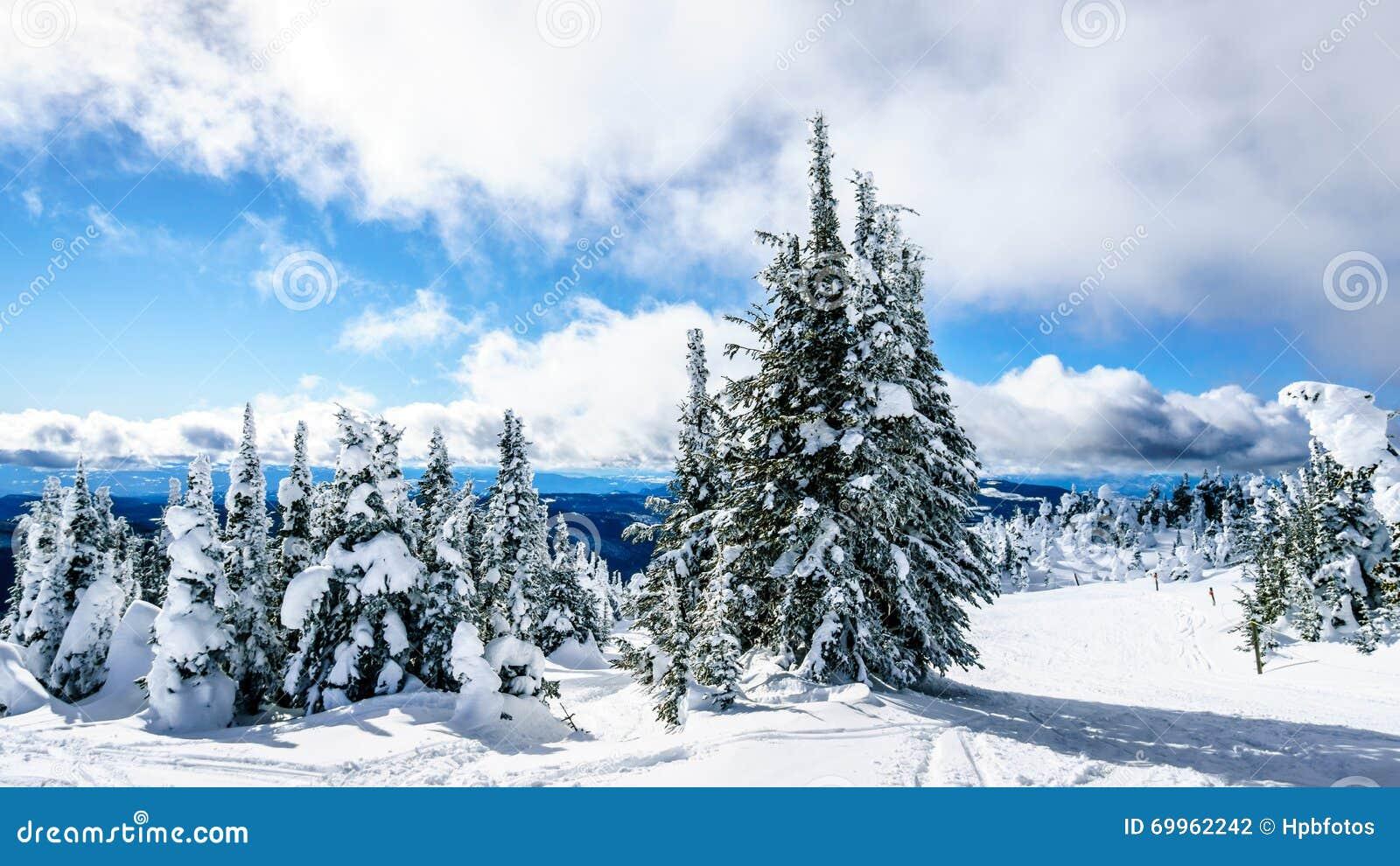 Śnieg i głęboki śnieg Zakrywający drzewa pakują w Wysoki Alpejskim