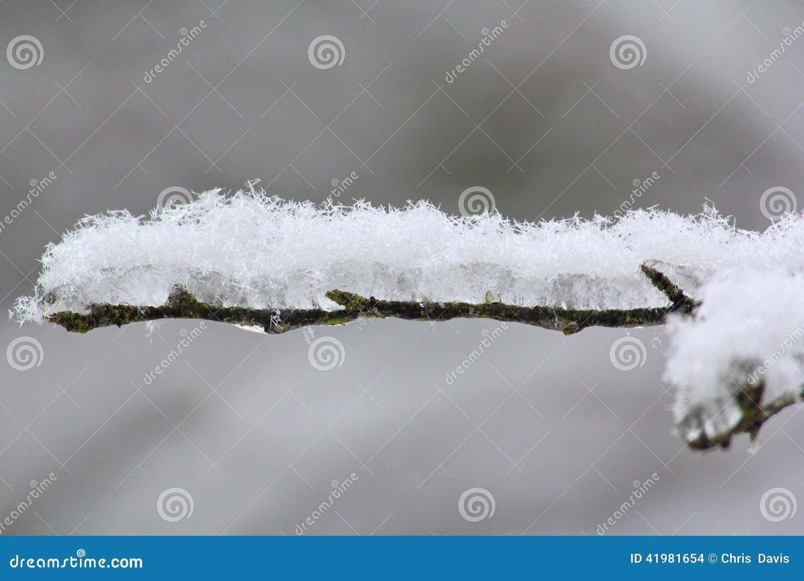 Śnieg i lód zakrywająca gałąź