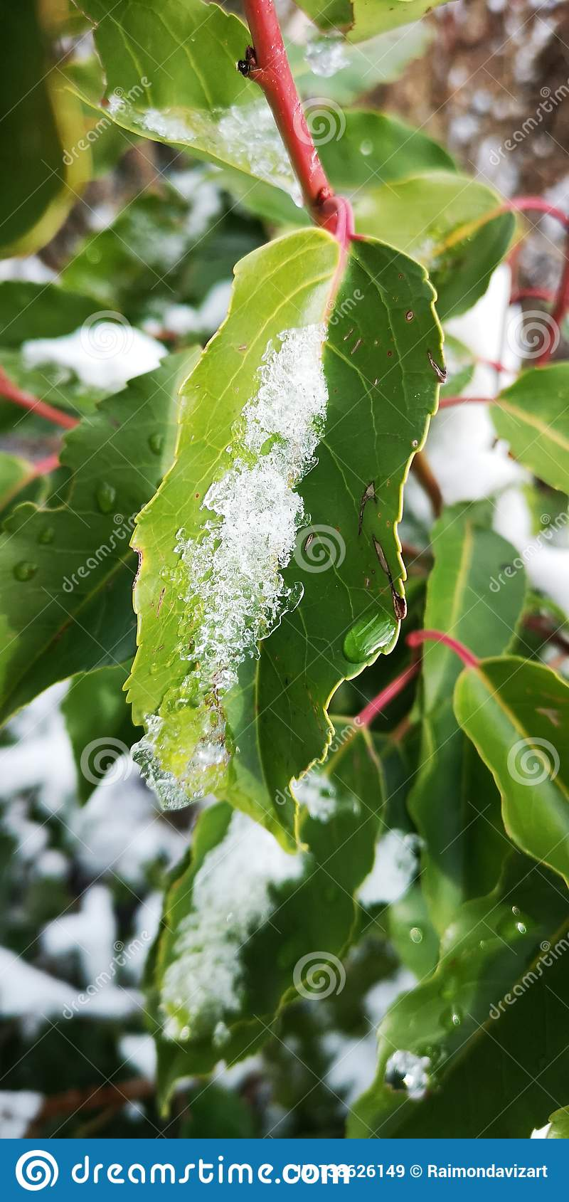 Śnieg na zielonym prześcieradle