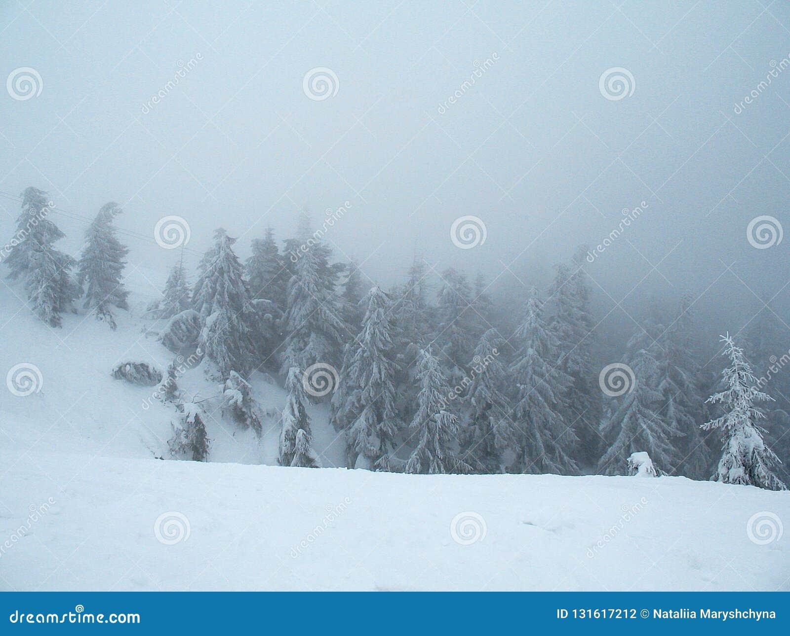Śnieg zakrywał halnych wzgórza z lasem w gęstej mgle