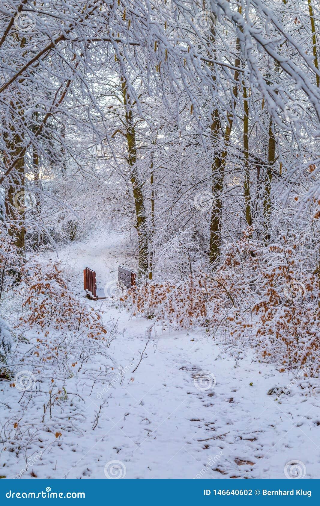 Śnieg zakrywał lasowego ślad z drewnianym footbridge l
