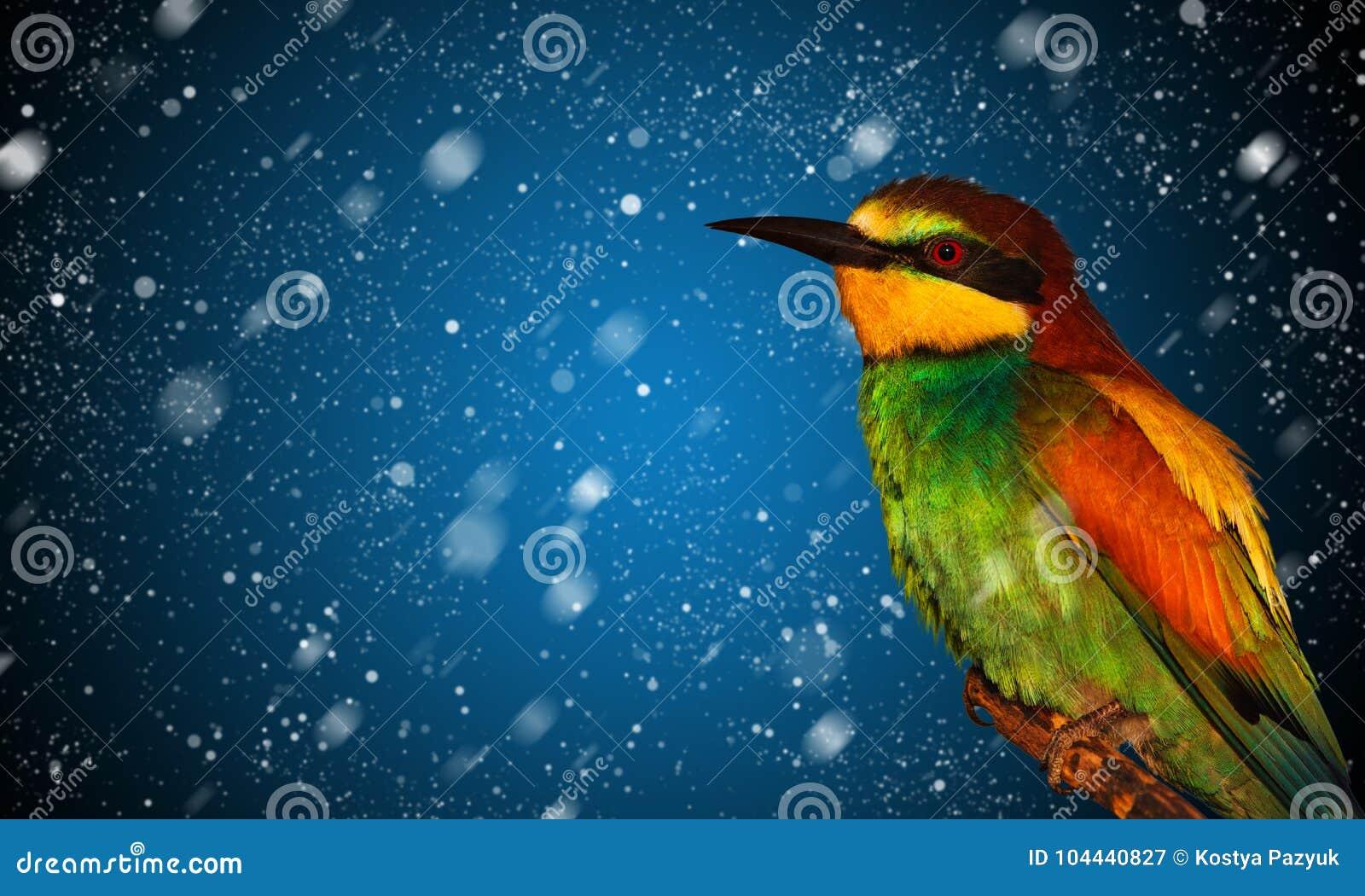 Śniegu spadać i barwiony ptak