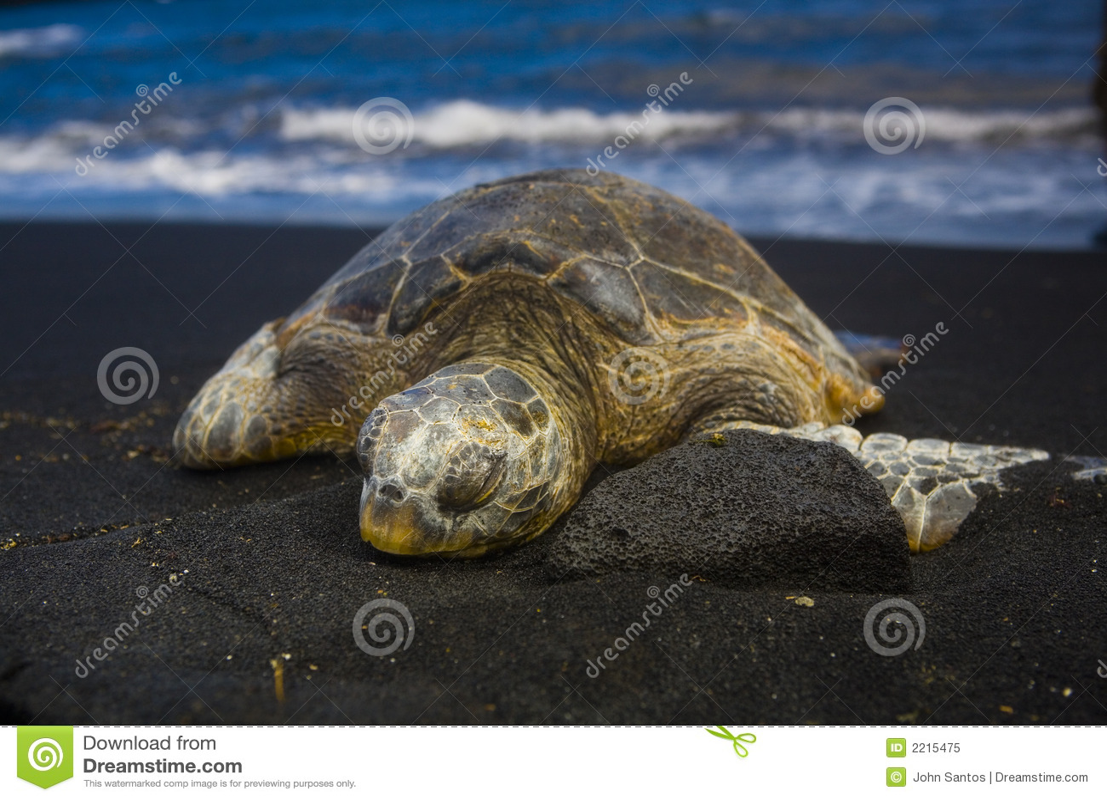 śpiący żółwia