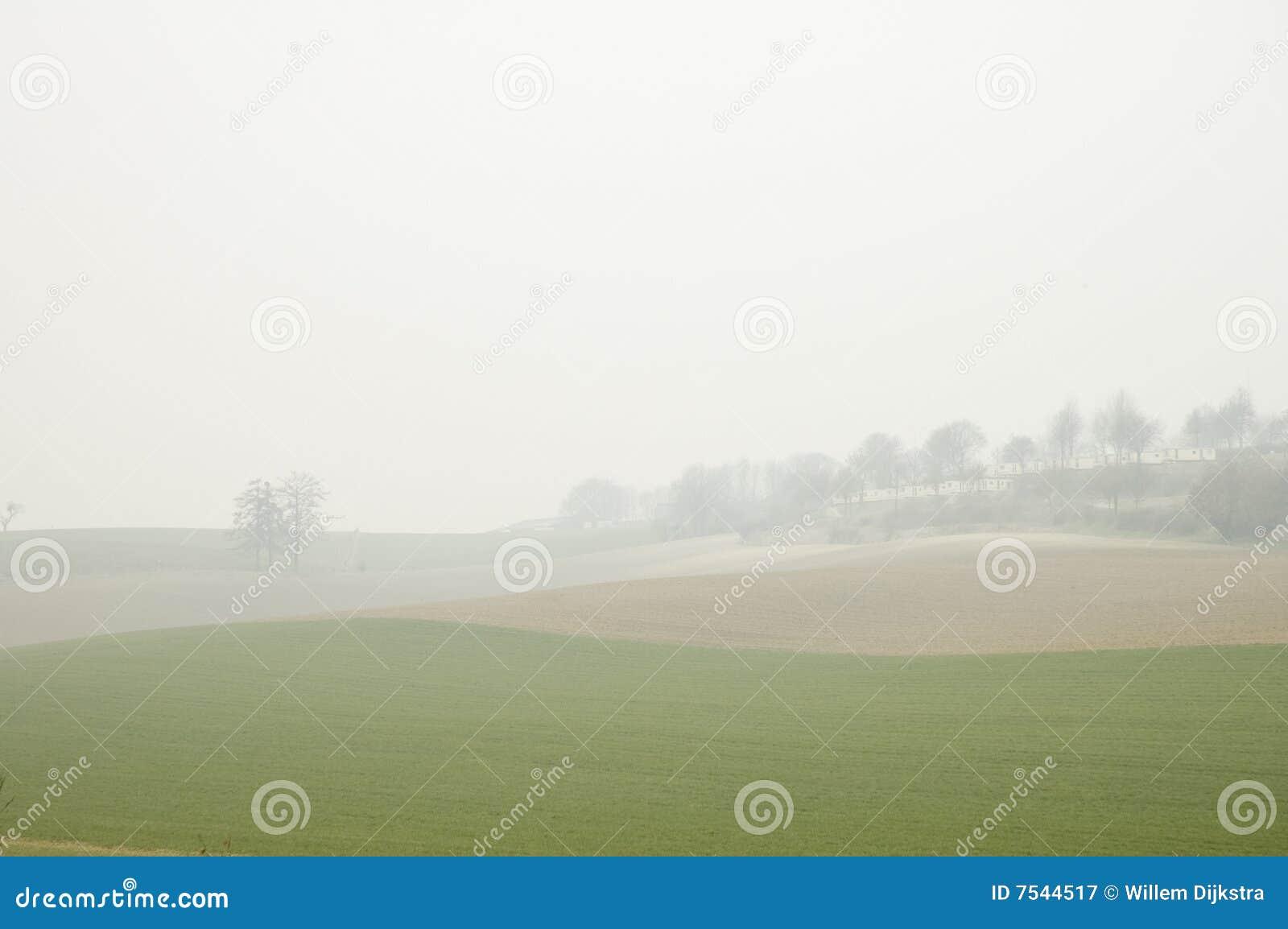 śródpolna mgła